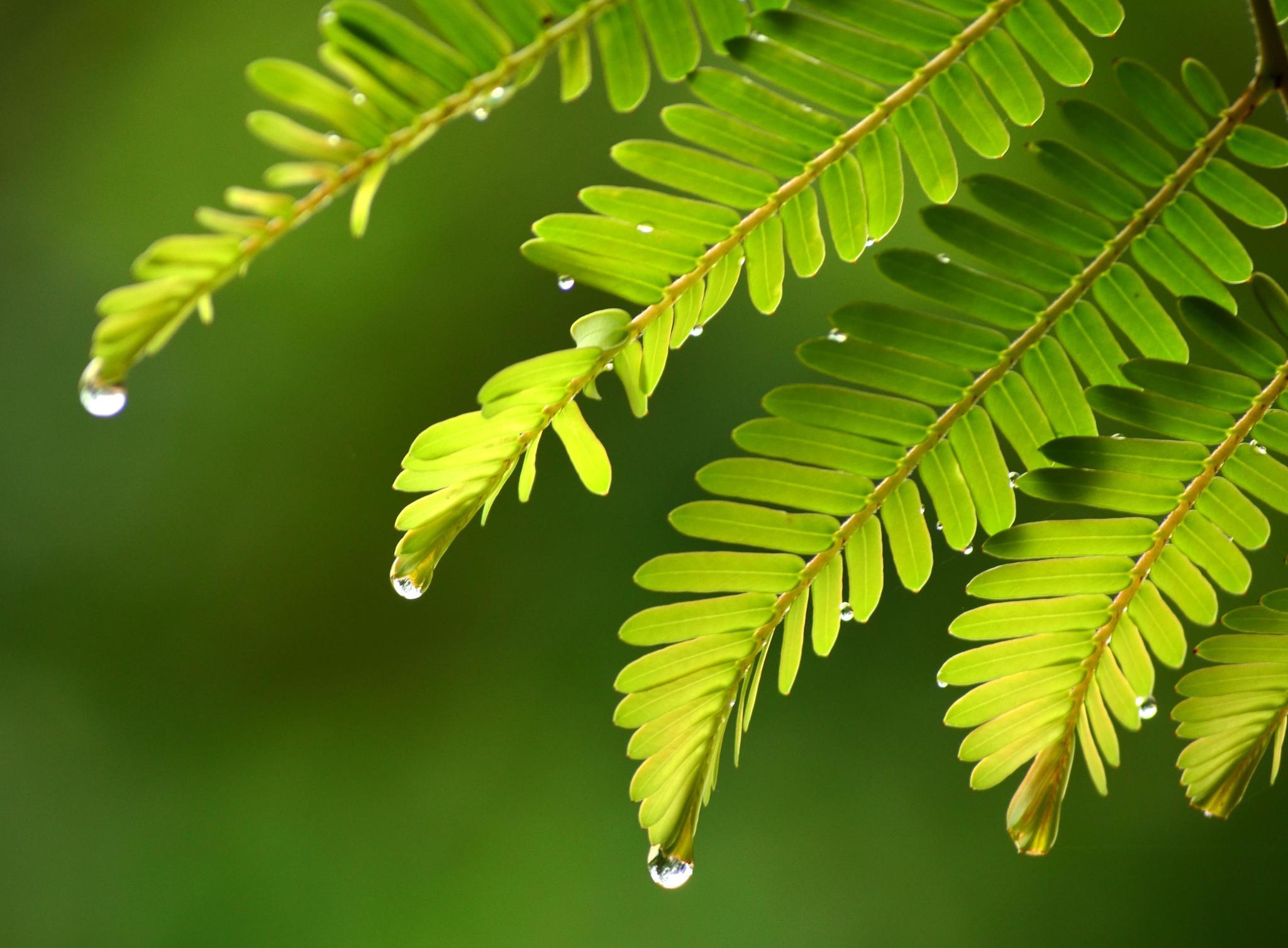 After the rain by Pradeep Krishnan