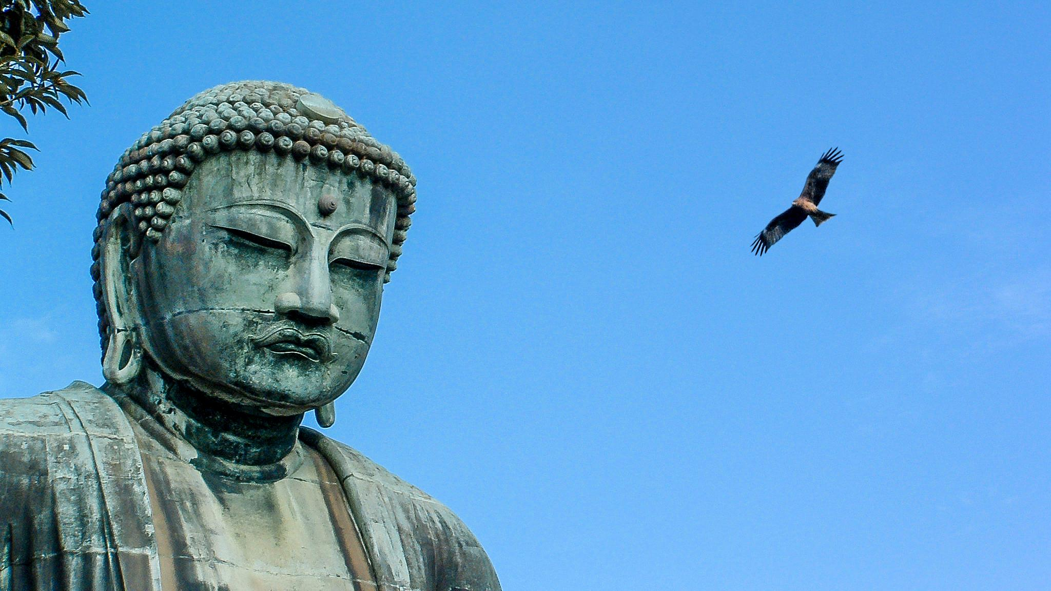 Photo in Travel #buddha #daibutsu #kamakura #japan #bird of prey #eagle #nature
