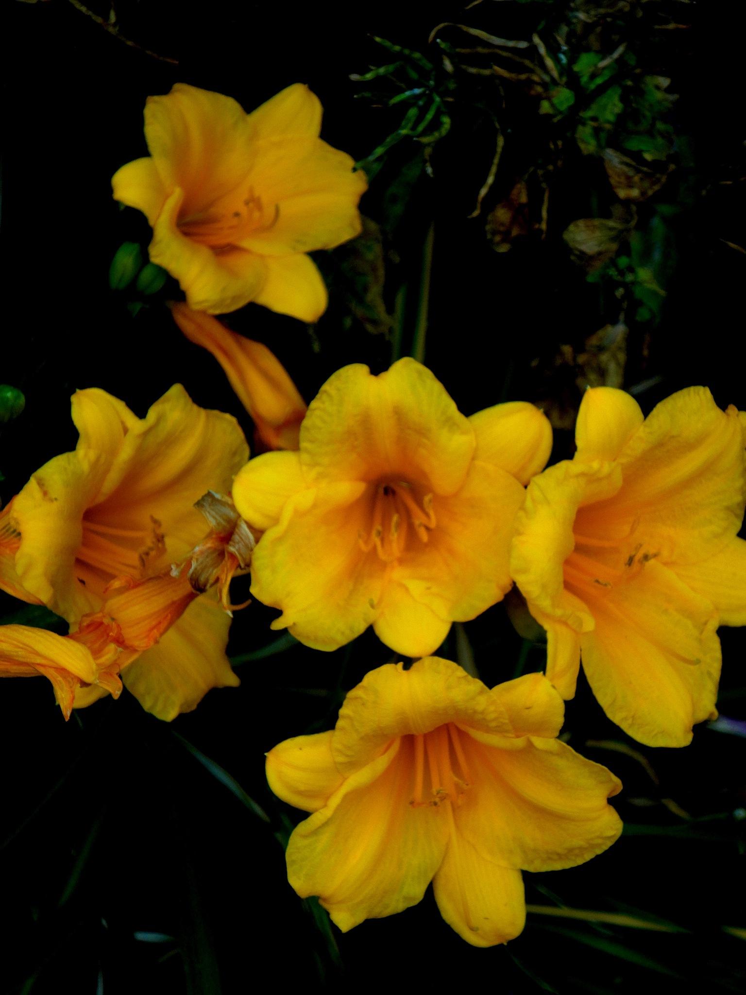 yellow flowers by nancy.mitchell3