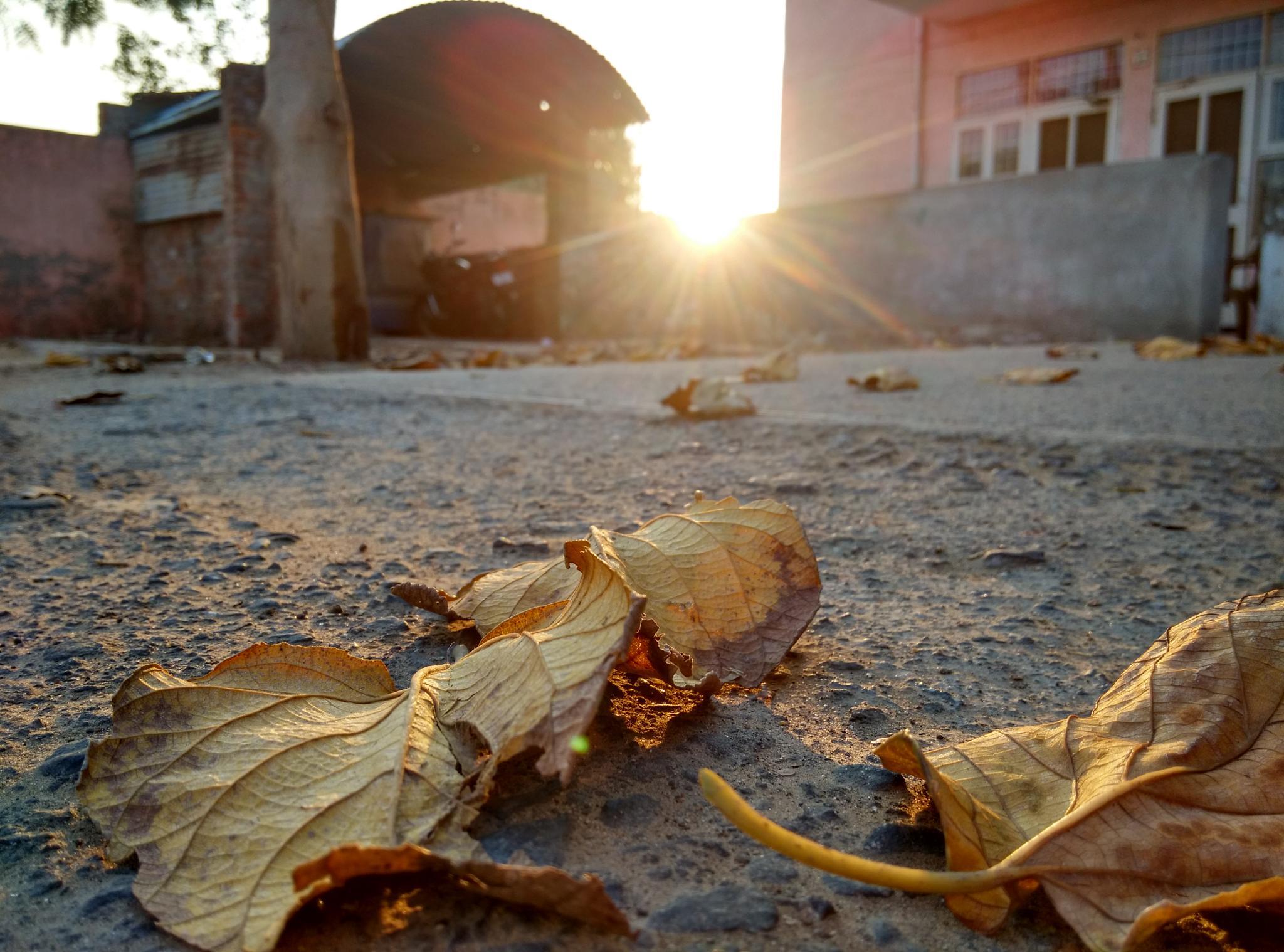 Leaves by SangwanShiva