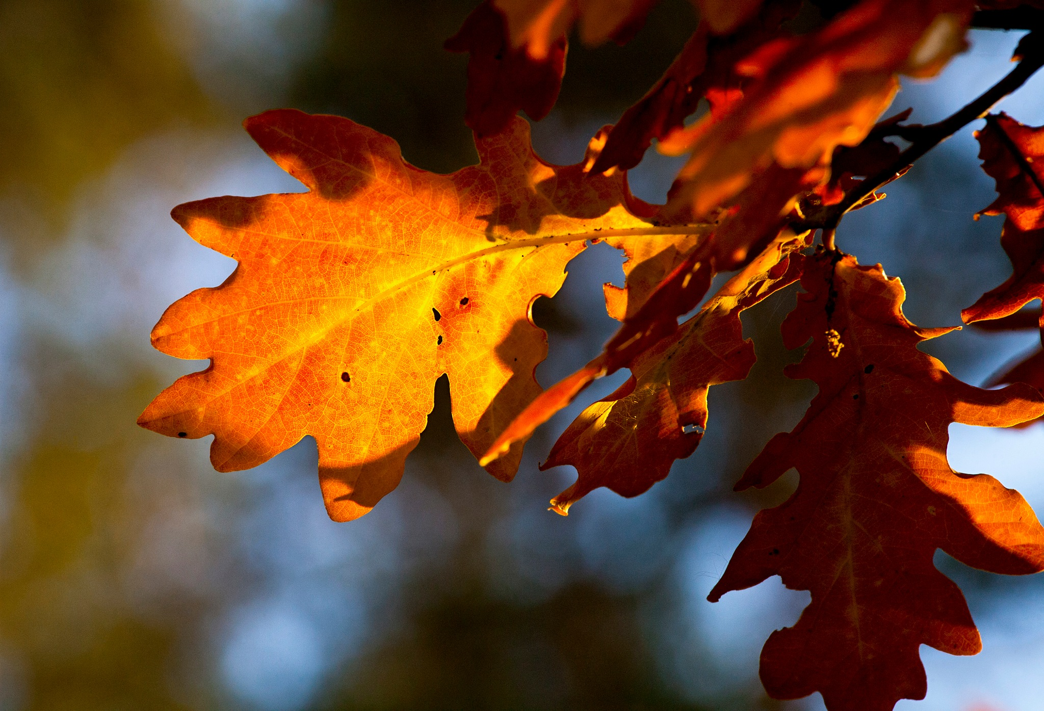 Autumn leaves by Paw