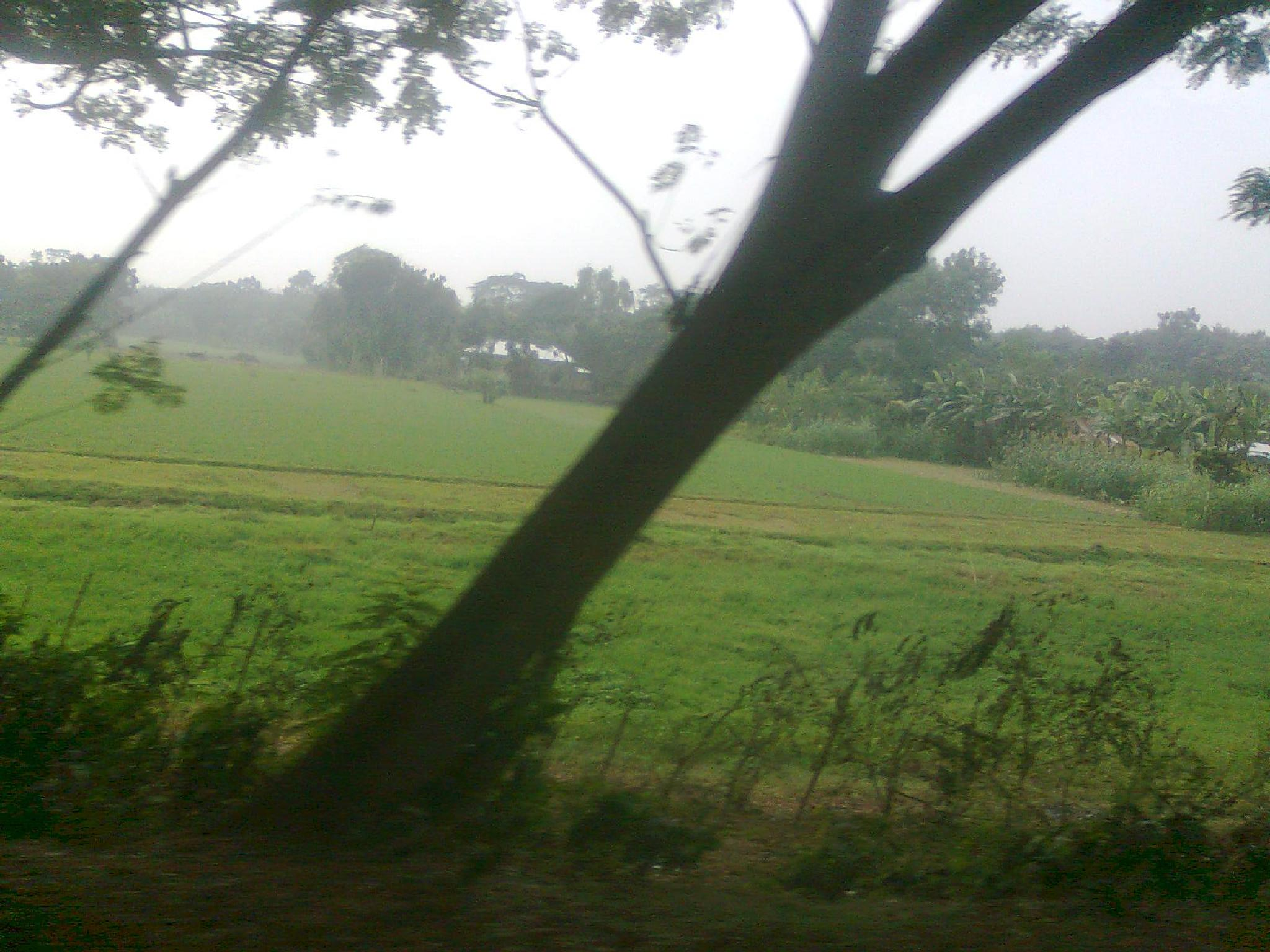 Village of Bangladesh by akhtarudduza