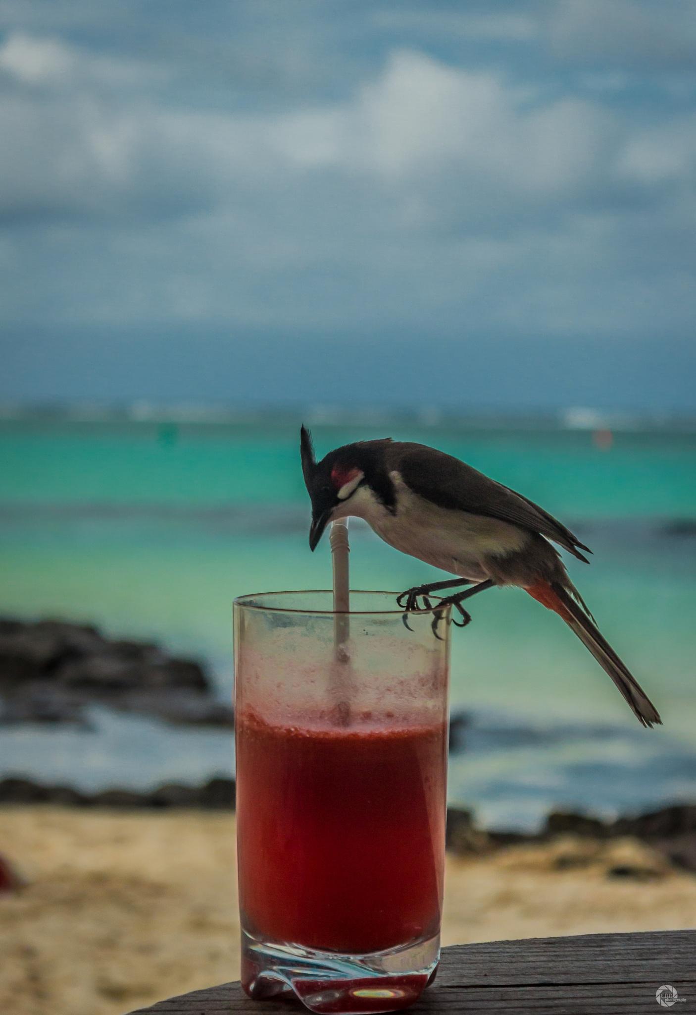 Drunk Bird by Eshveen Dabee