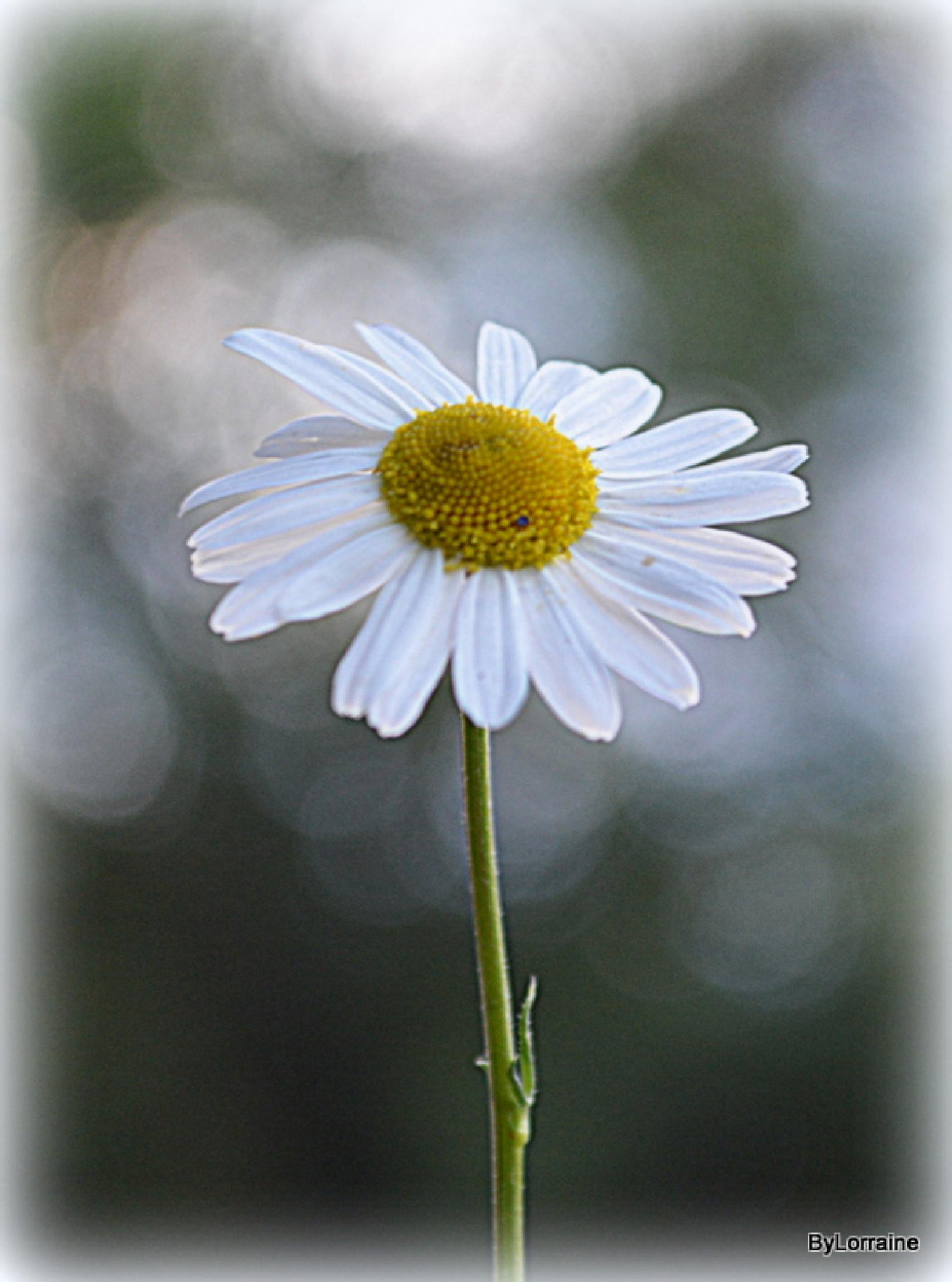 .. just a daisy by Lorraine. Sgt