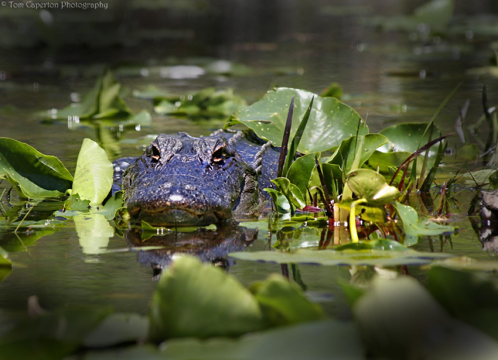 I'm watching you by Tom Caperton