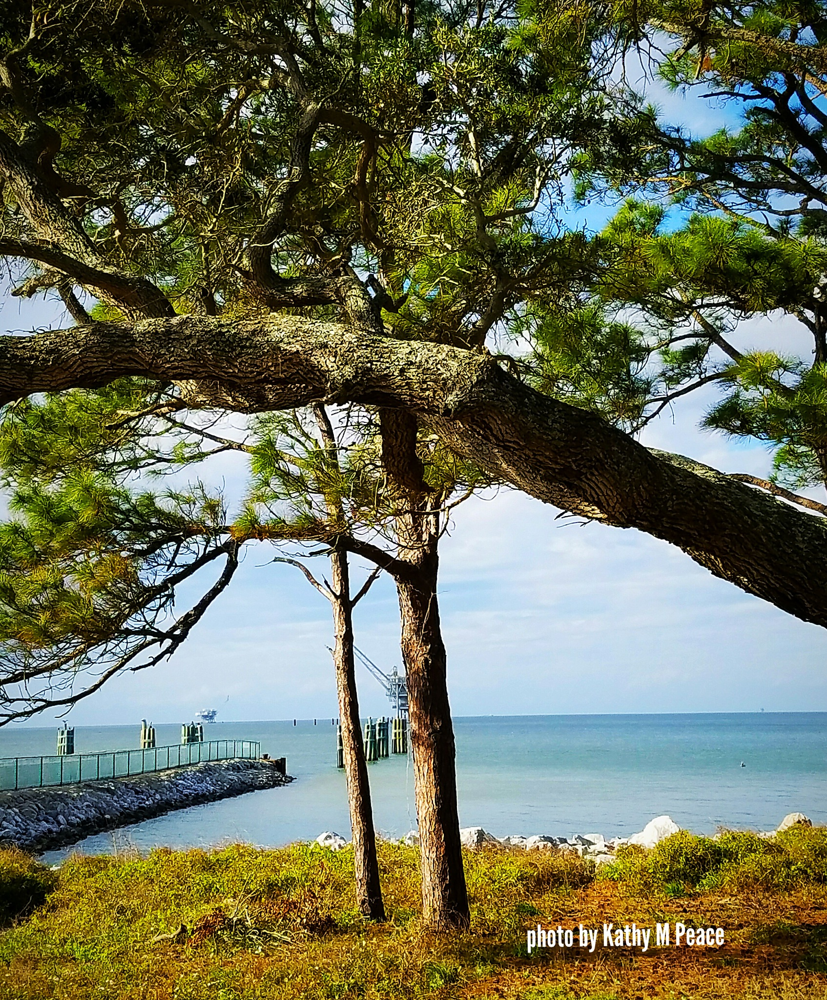 pines and water by kathy.peace.3