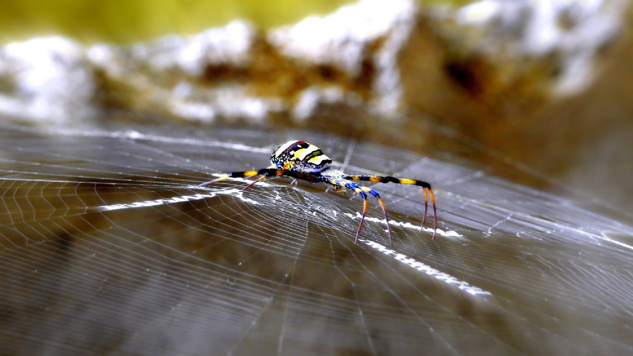 Colorful Spider by Satya