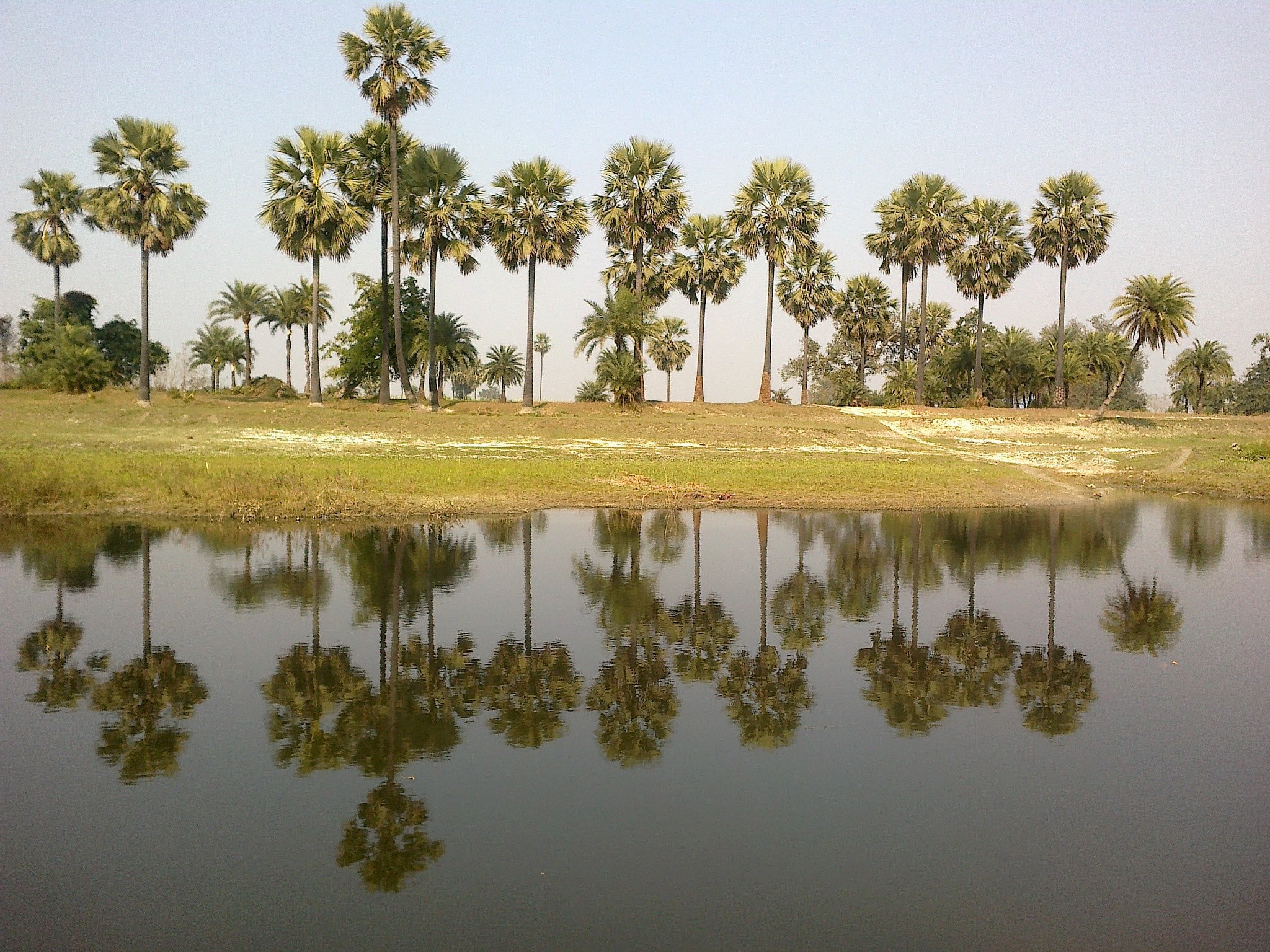 Reflection by Satya