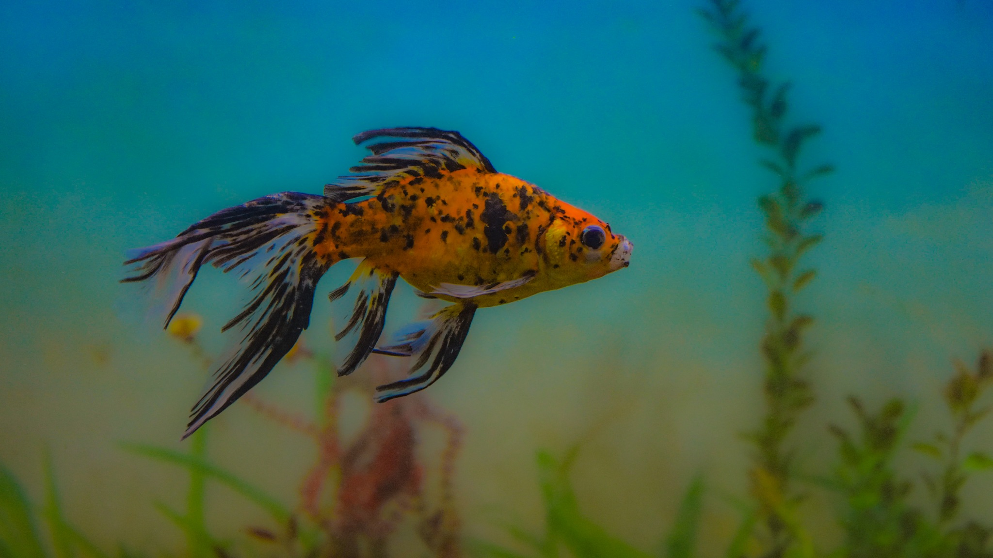 Aquatic by Satya