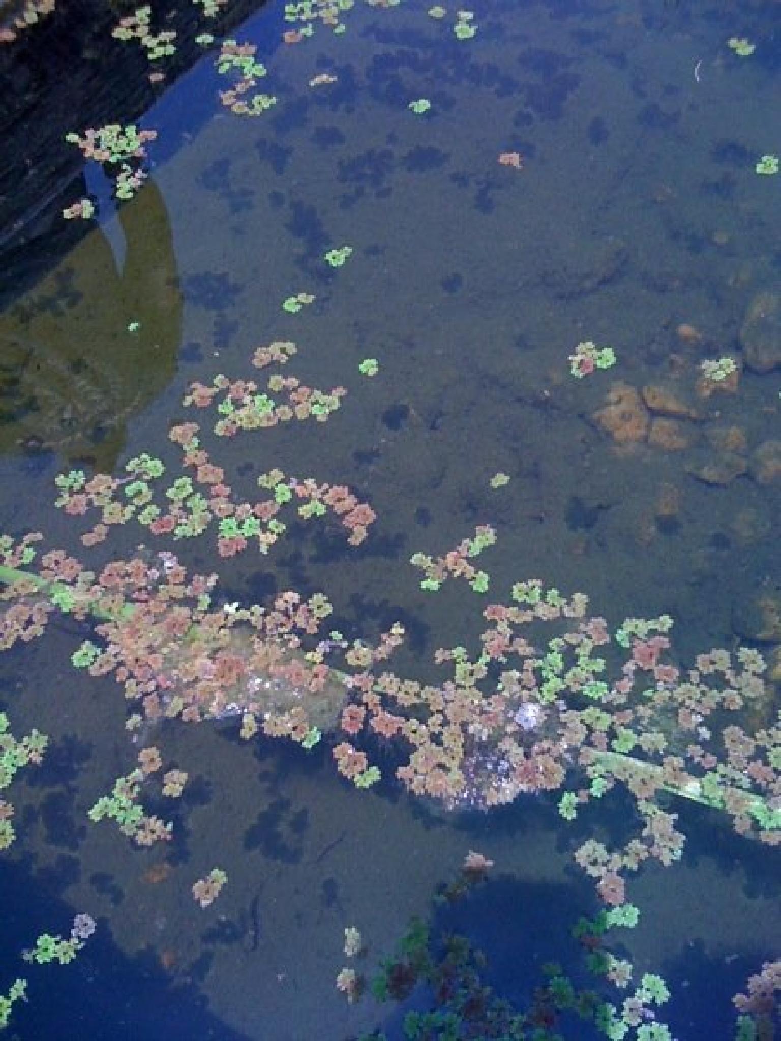 Pond Water by AllySylum
