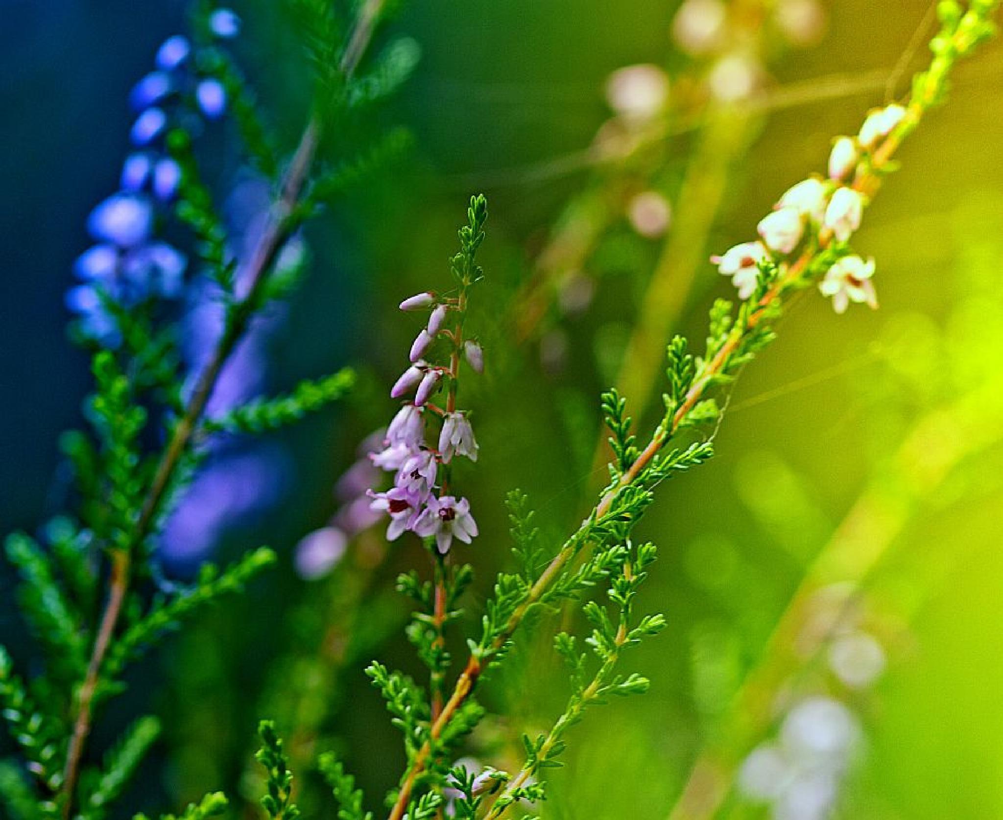 Summer moment by Almantas B