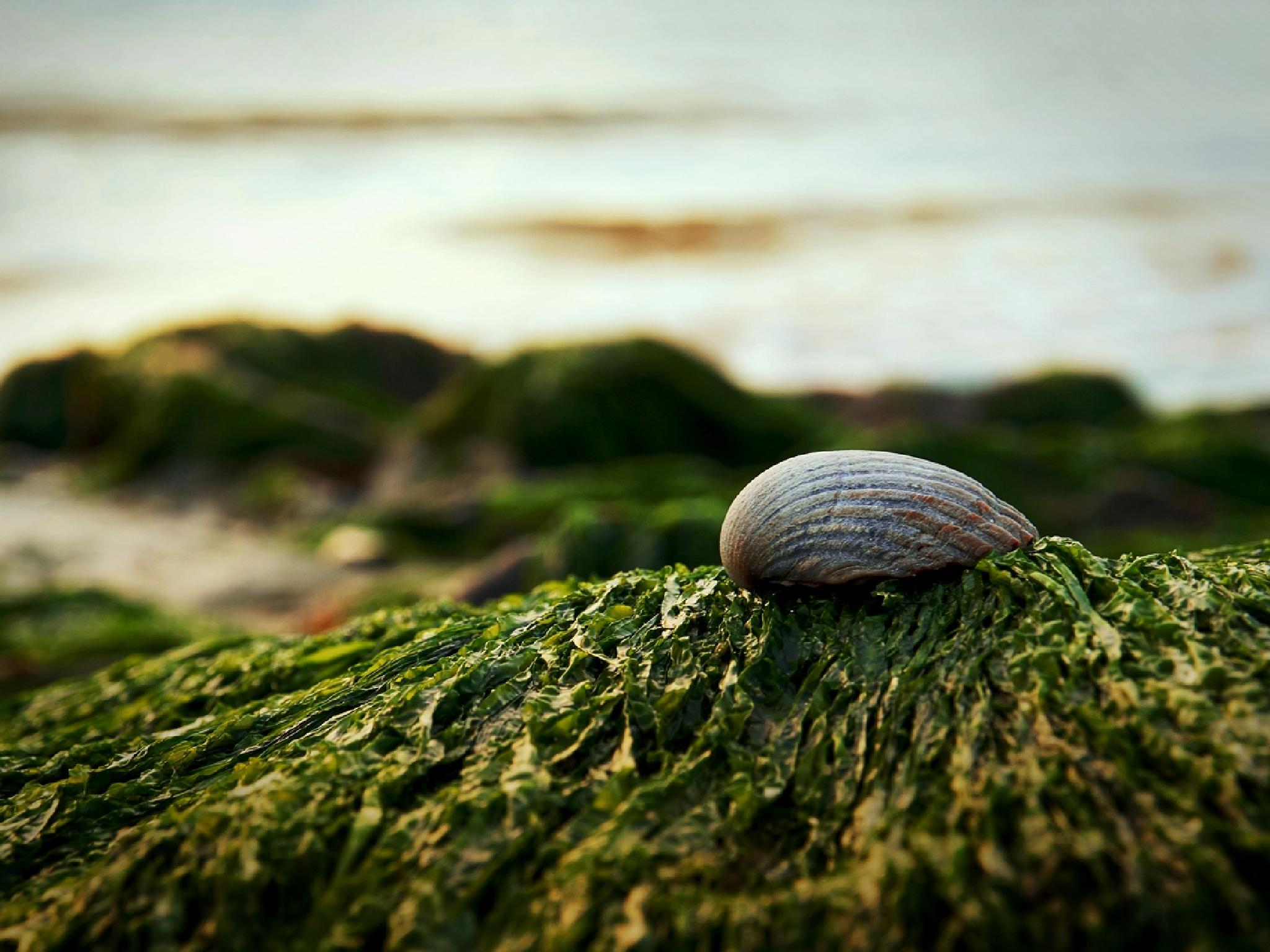 Shell by Almantas B
