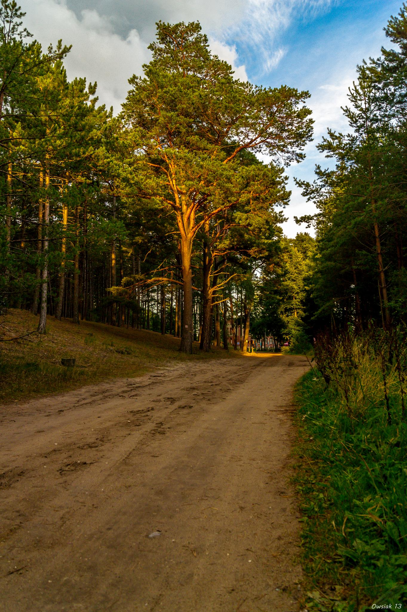 On the way through forest :) by Grzegorz Owsiany