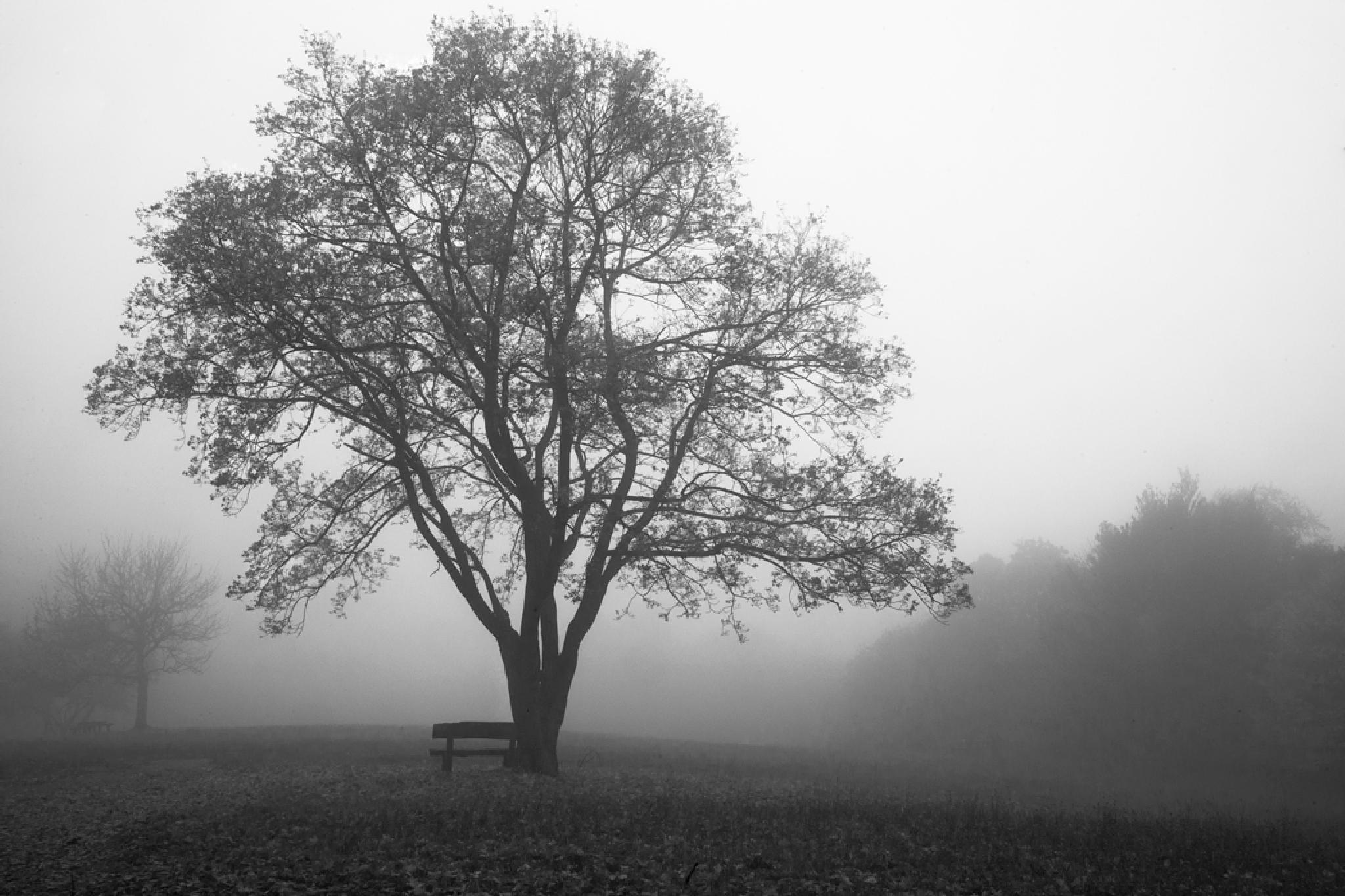 Lonely tree and bench by Zsoka Lorincz