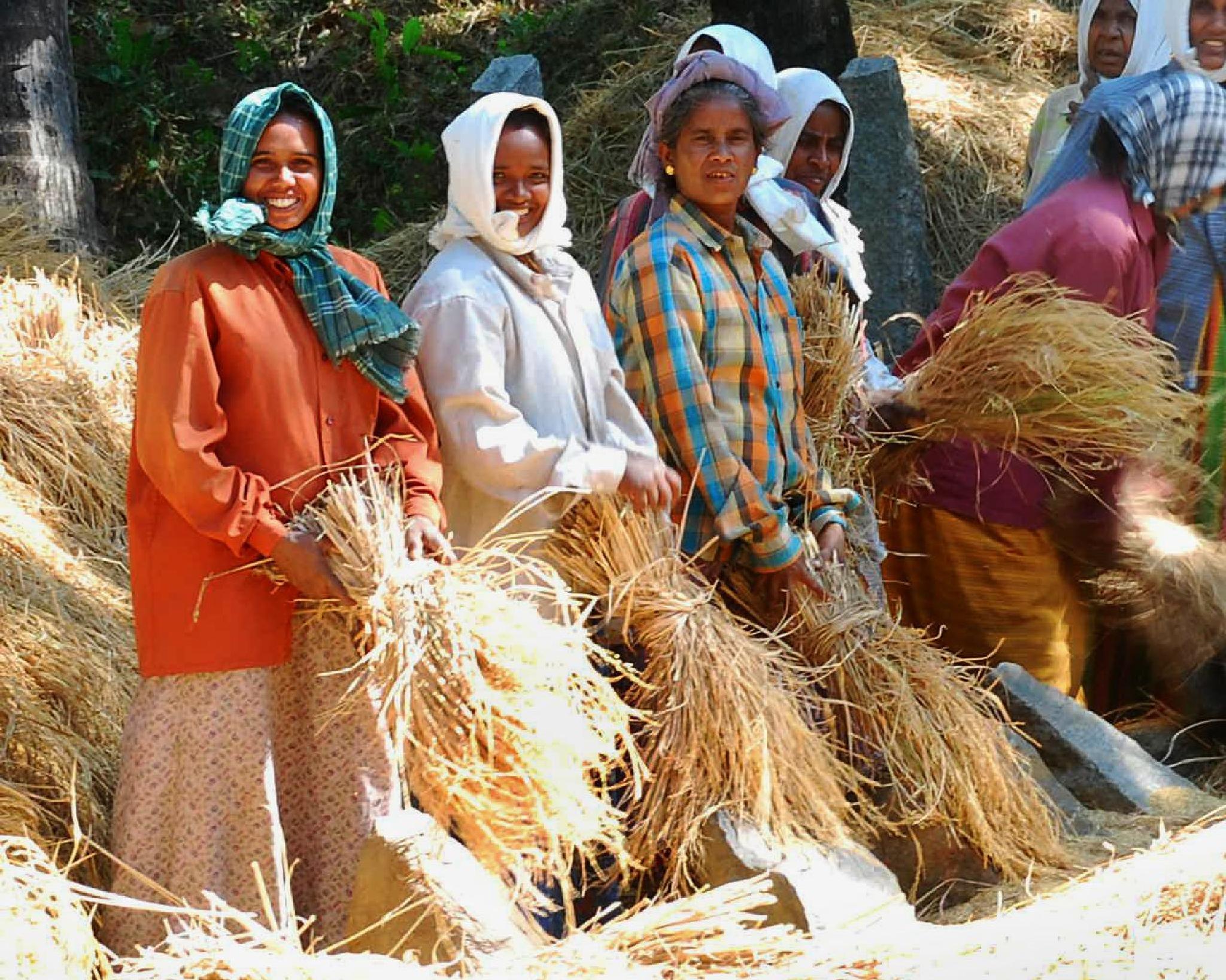 Busy Farmhands by Rauf