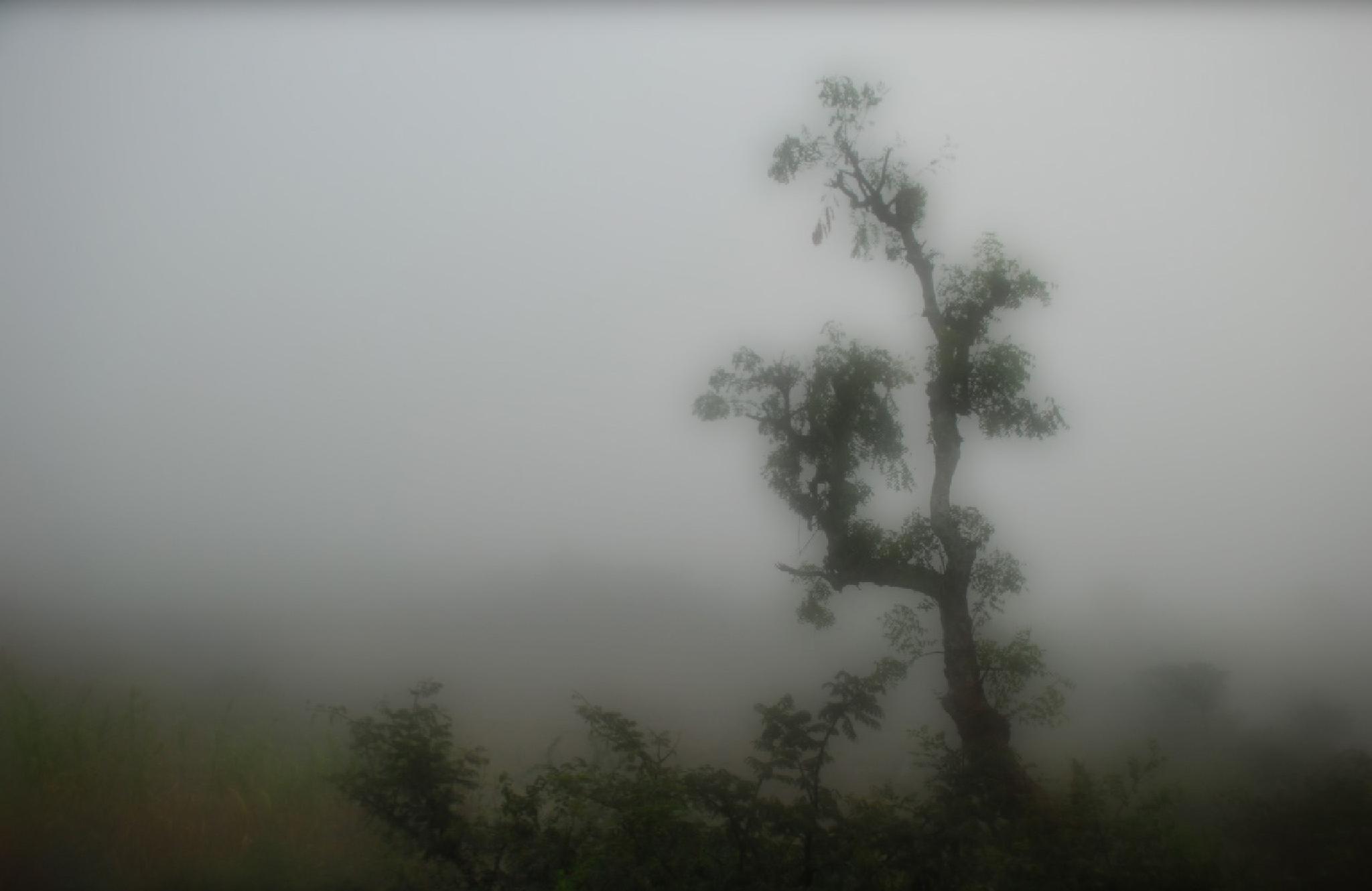 Mist by Rauf