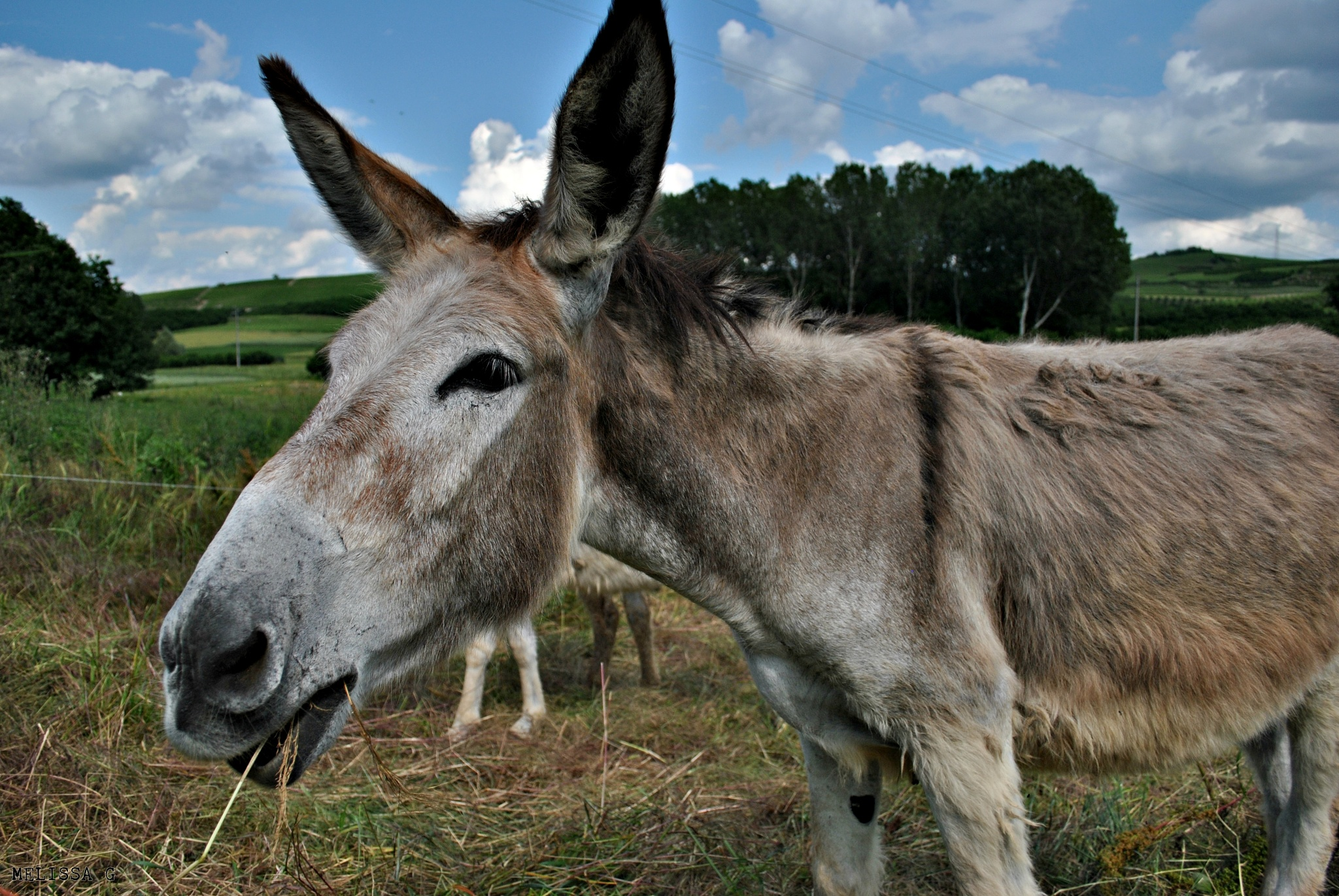 Photo in Animal #asini #donkeys #fattoria #farm #campagnia #roero #langhe #piemonte #fotografia #animal #animali