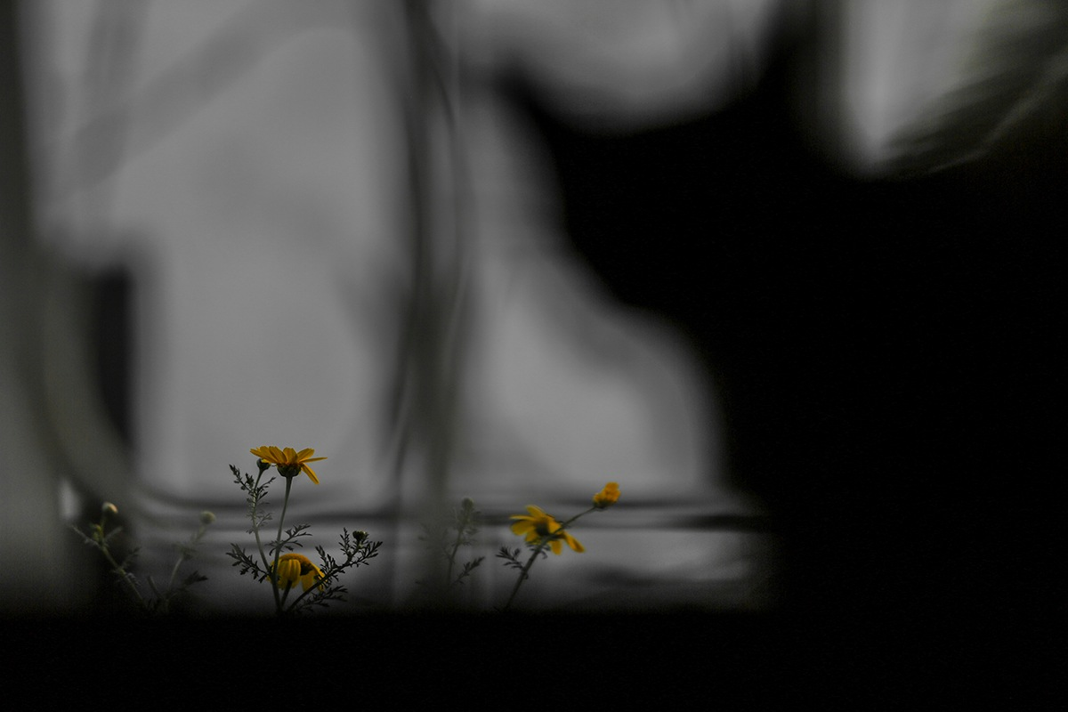The shadow of the cat and yellow flower.  by Shatz