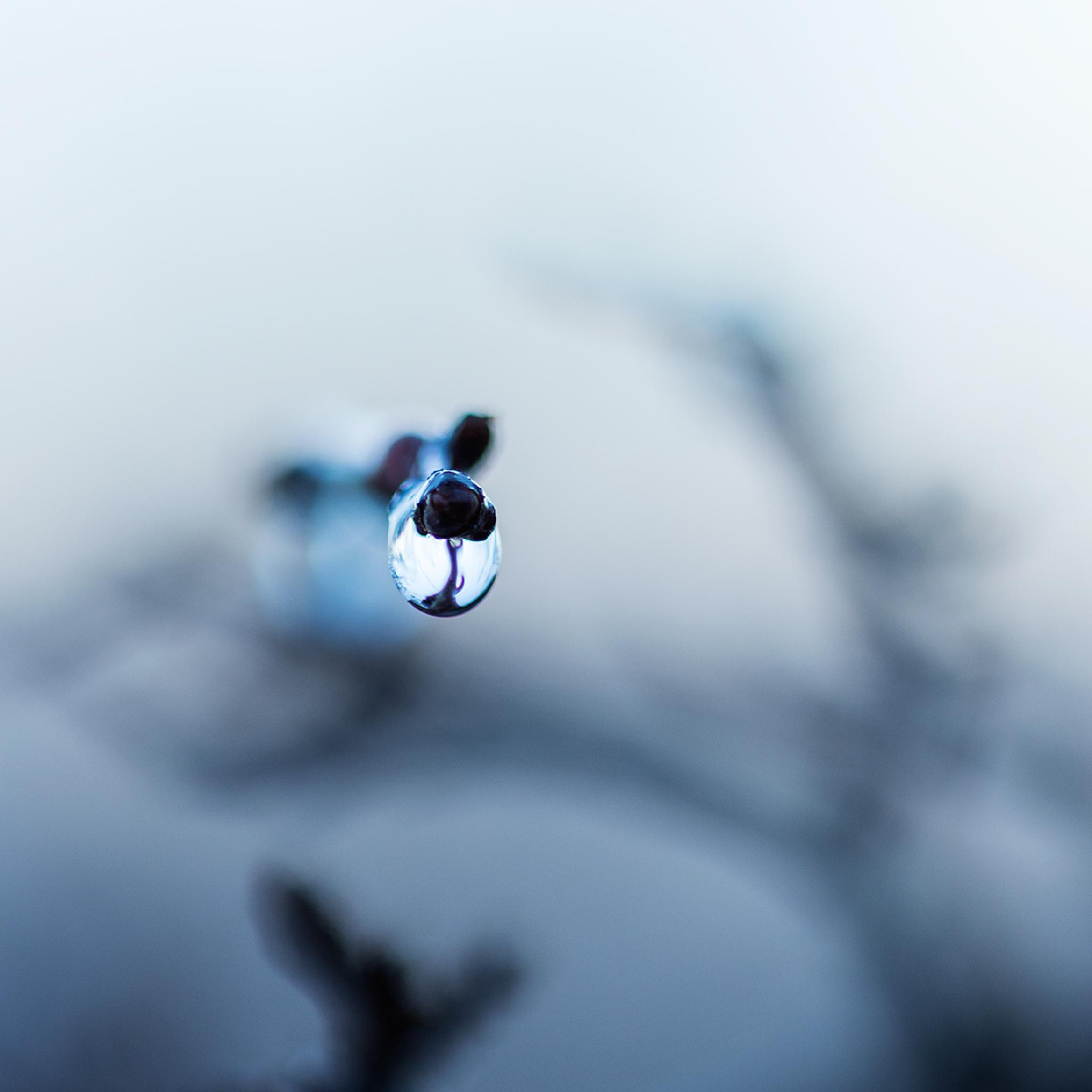 Winter Cries by rhonda.broich