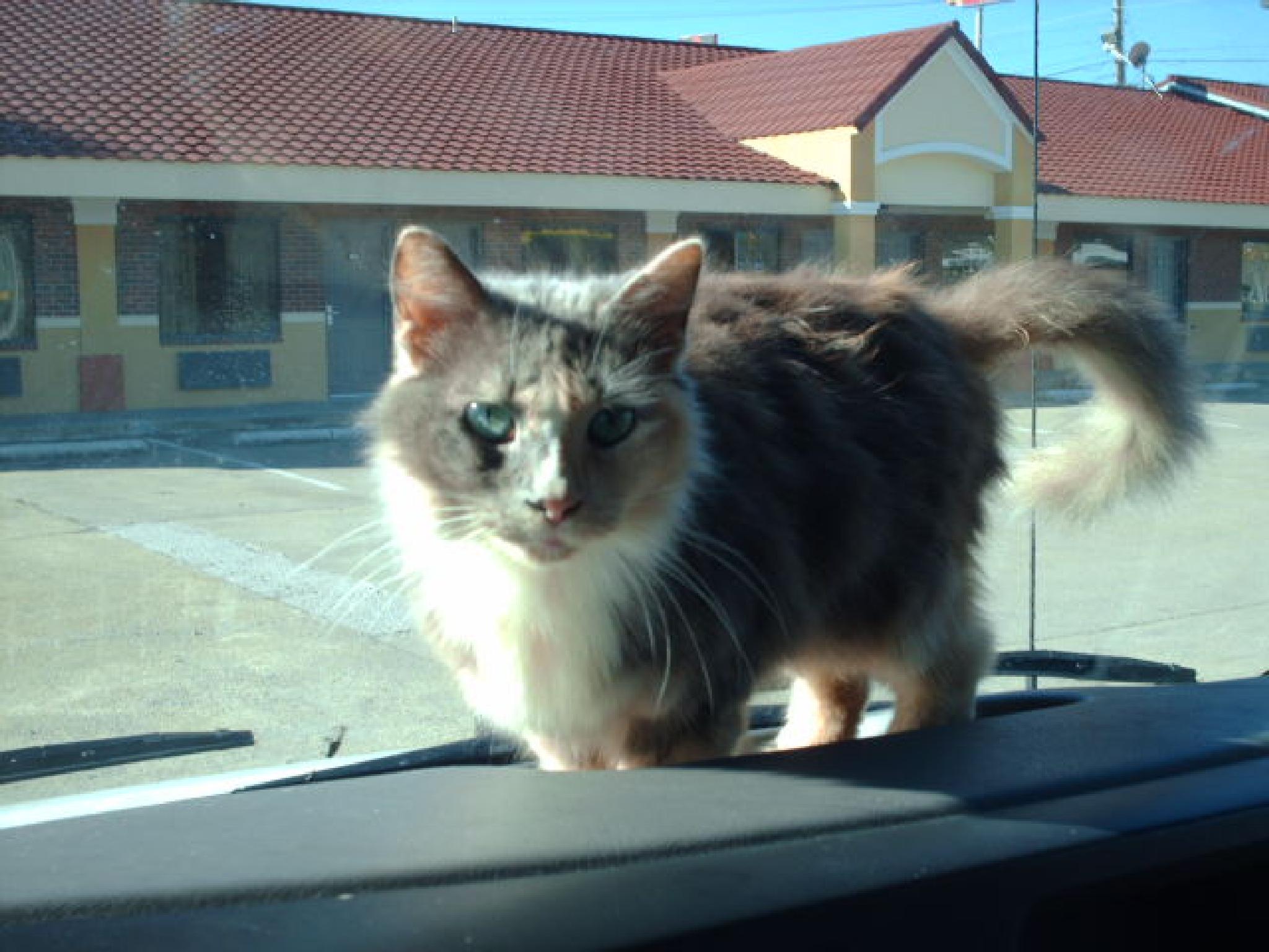 Brandy loved traveling by samantha.lepine.98