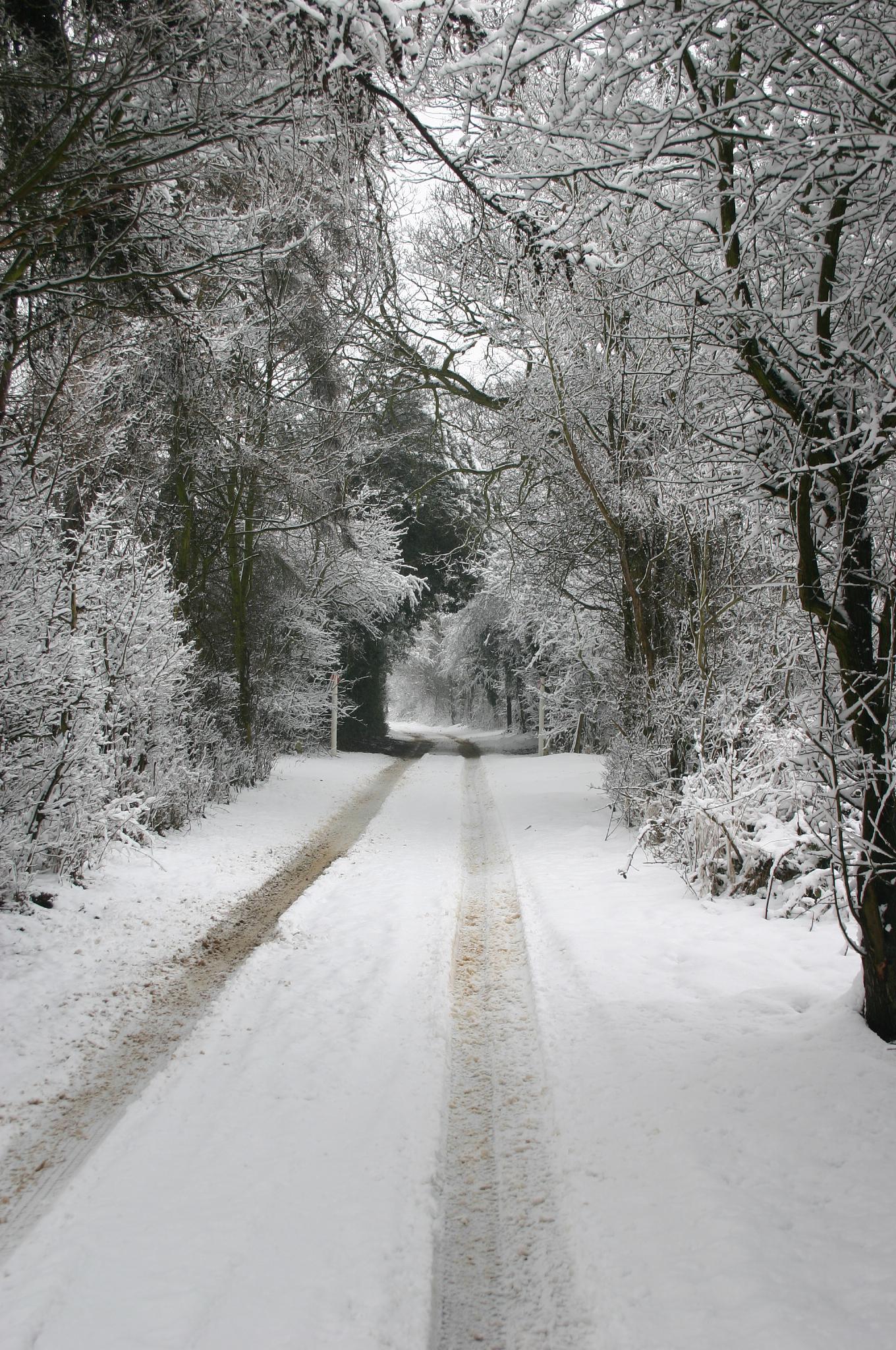 Snowy lane by ashley.cox.1806