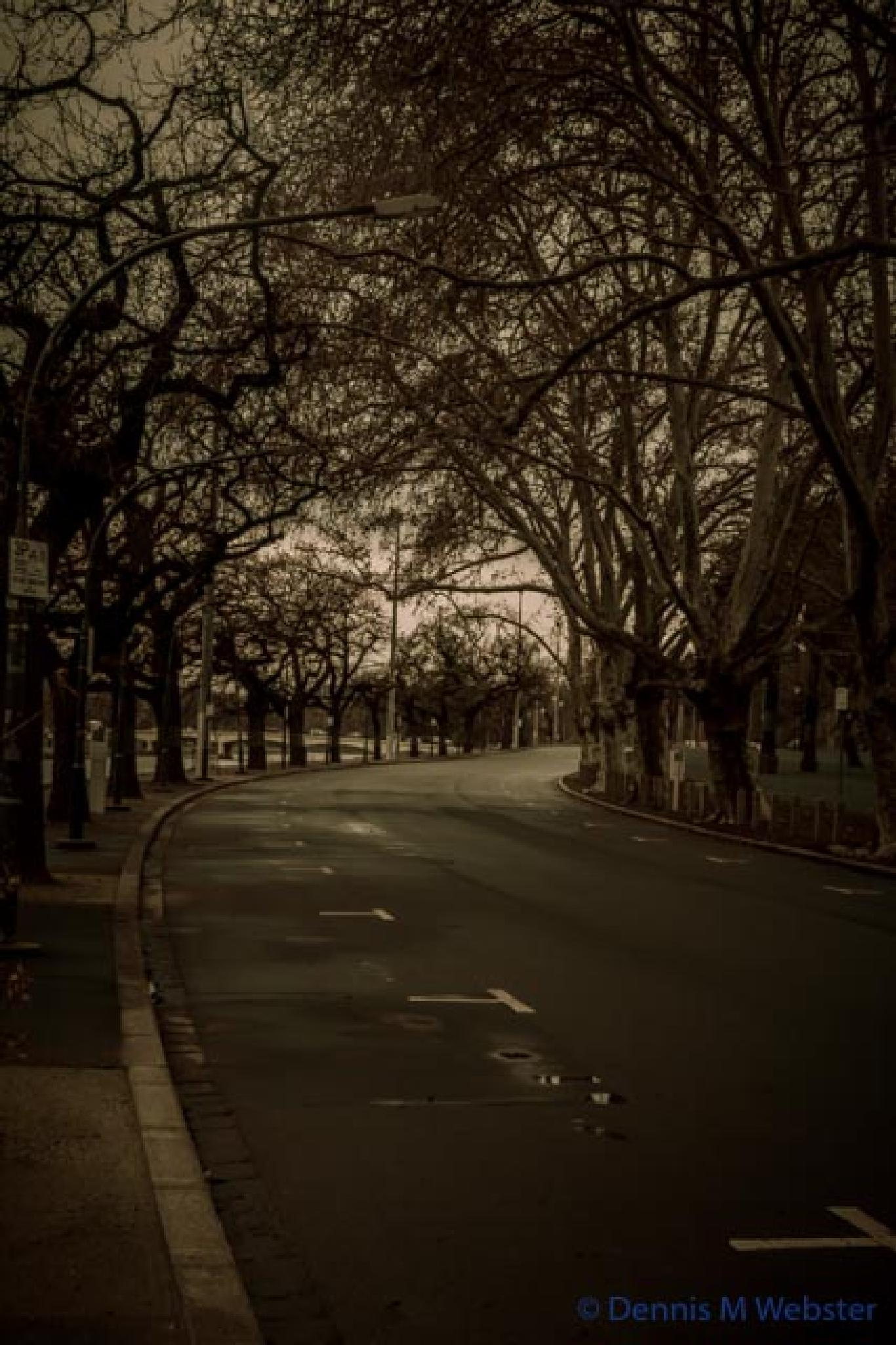 Photo in Cityscape #alexandra gardens #melbourne #cold #wet #winter #road #empty #gloom