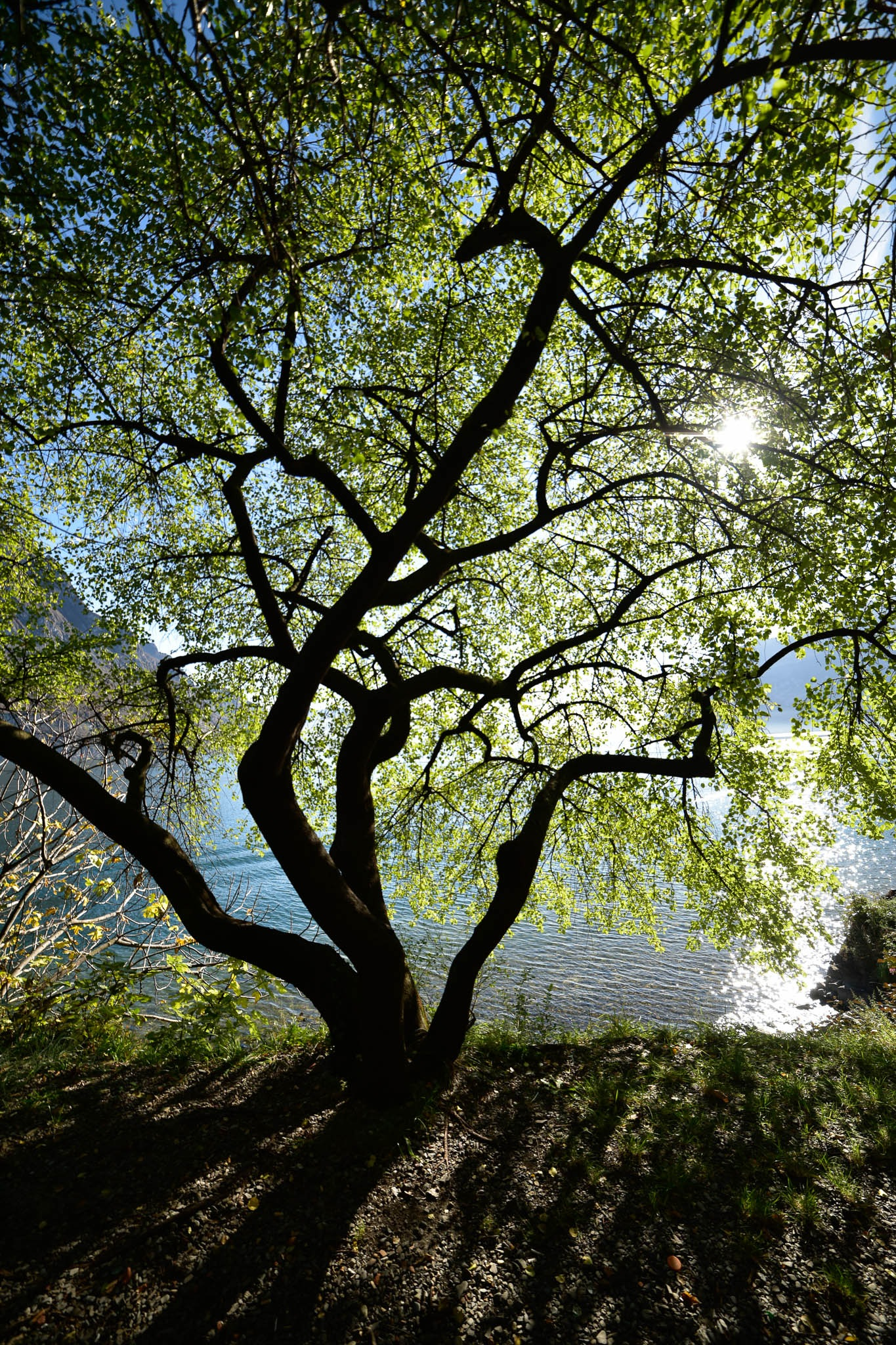 Twisted tree by roberto.fustinoni.60