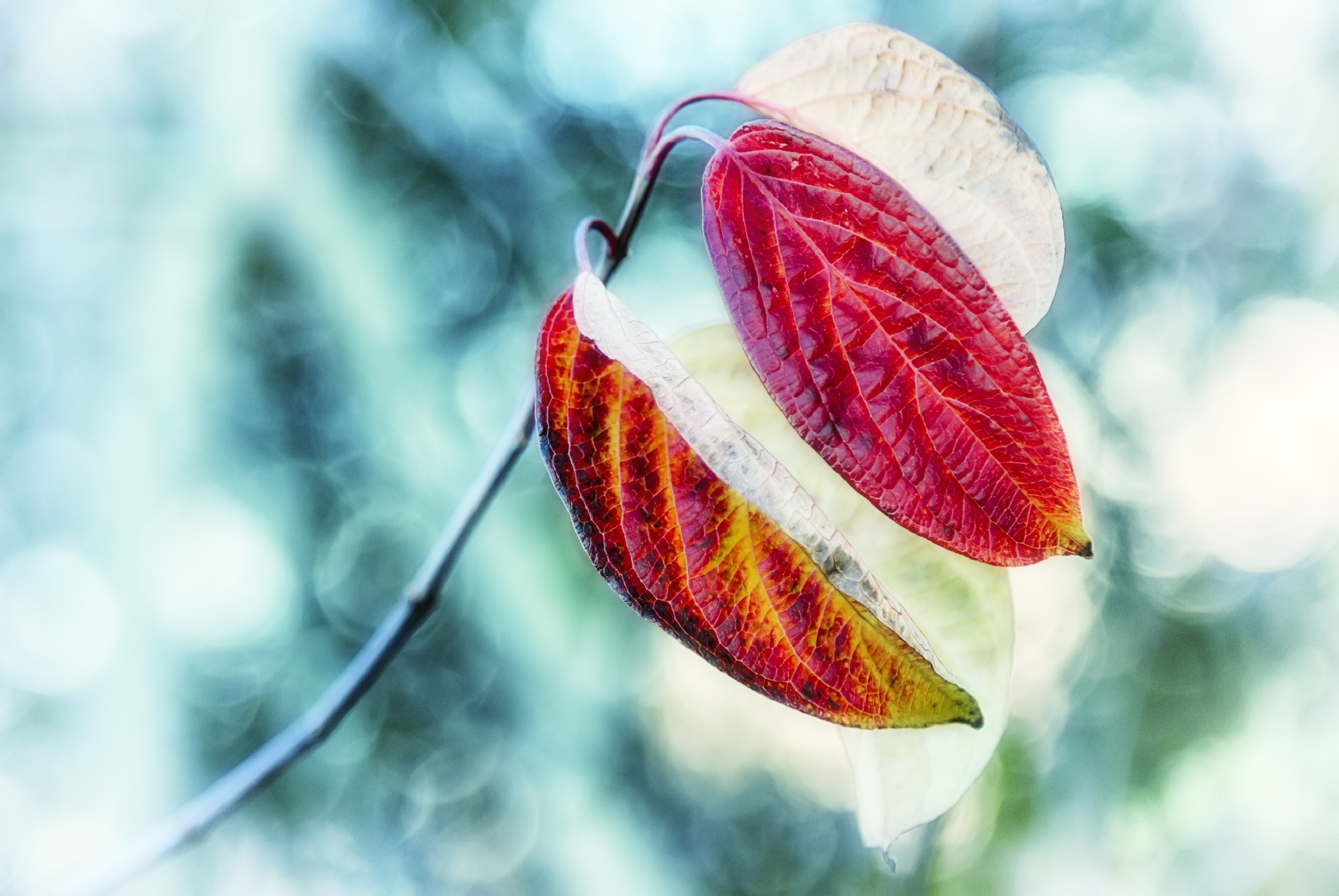 Beauty of leaves by zdravko.horvat