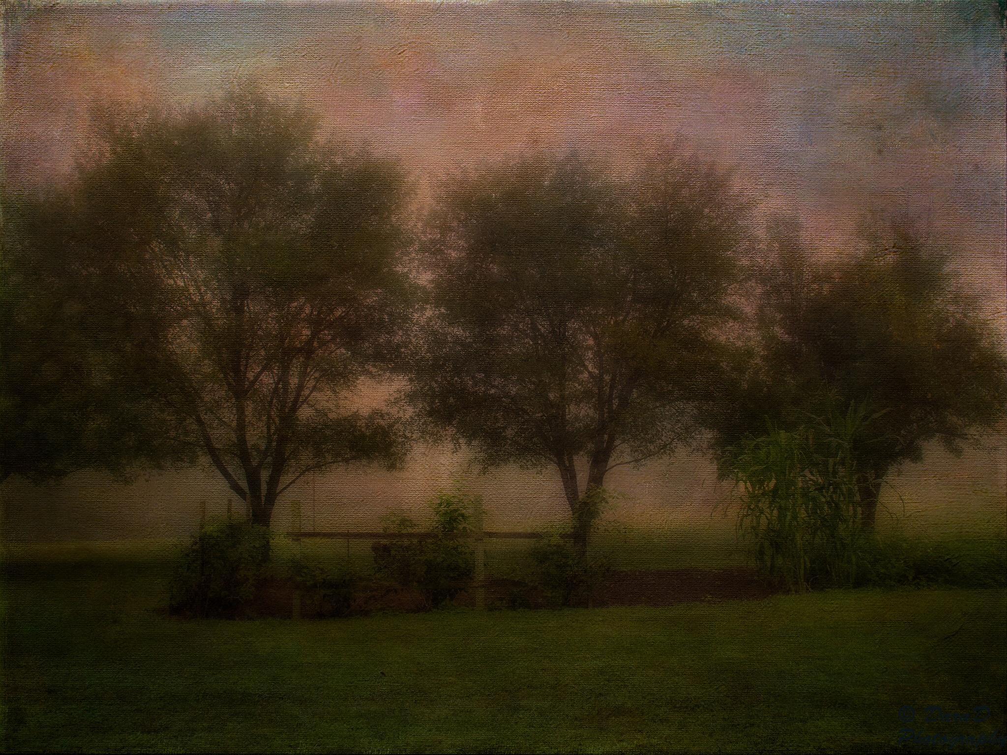 Trees Three by DaraD Photography
