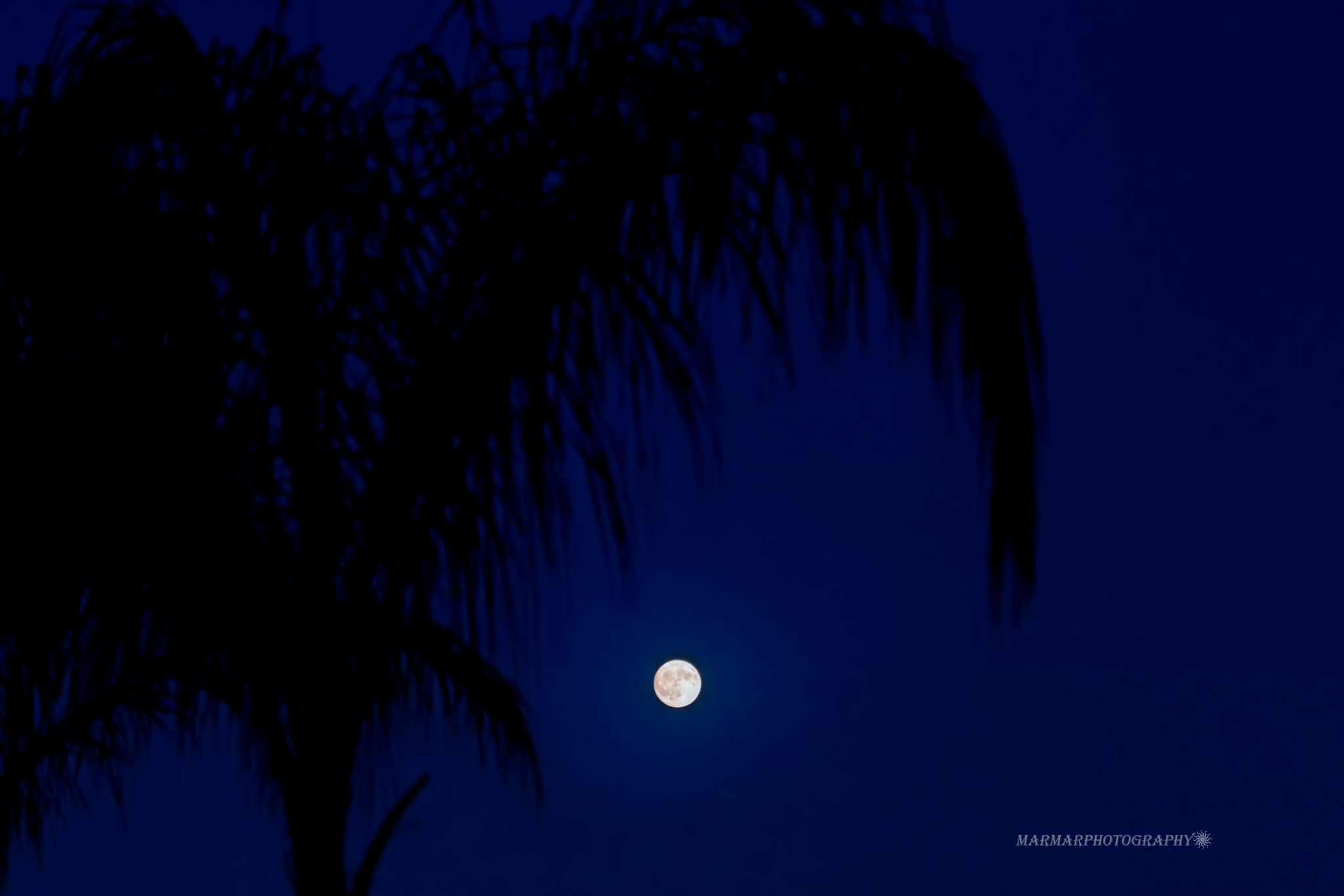 Blue Moon by Mary Carter