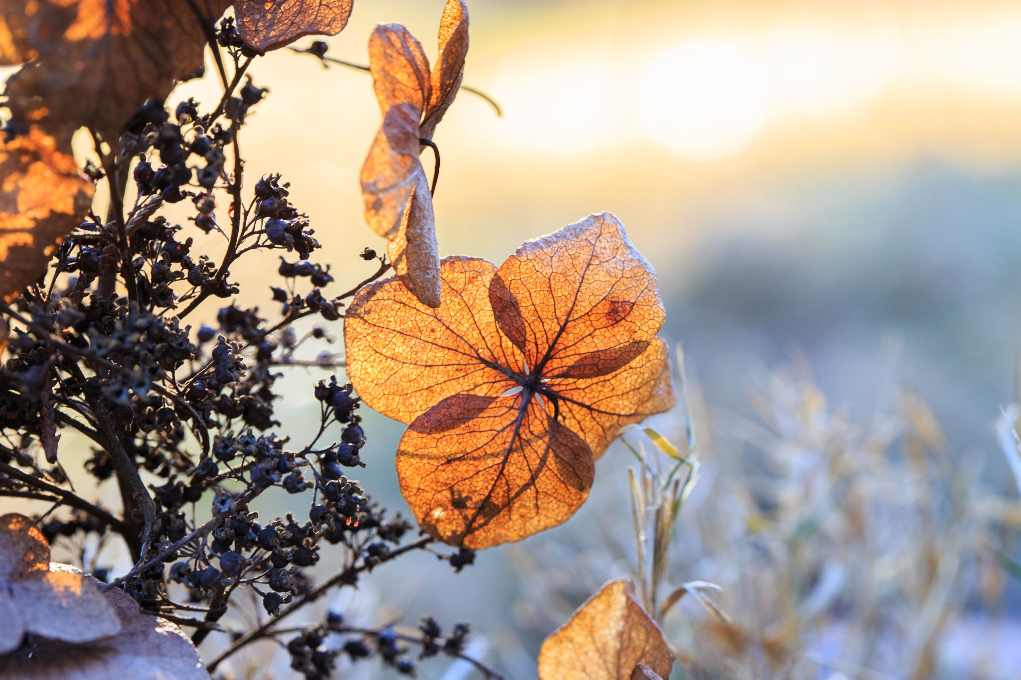 Winter Beauty 1 by Mary Carter