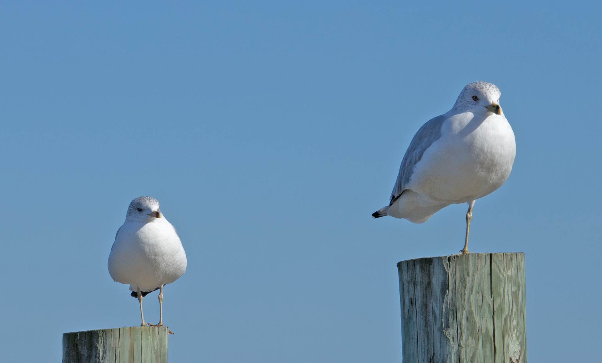 The one legged Gull by Mary Carter