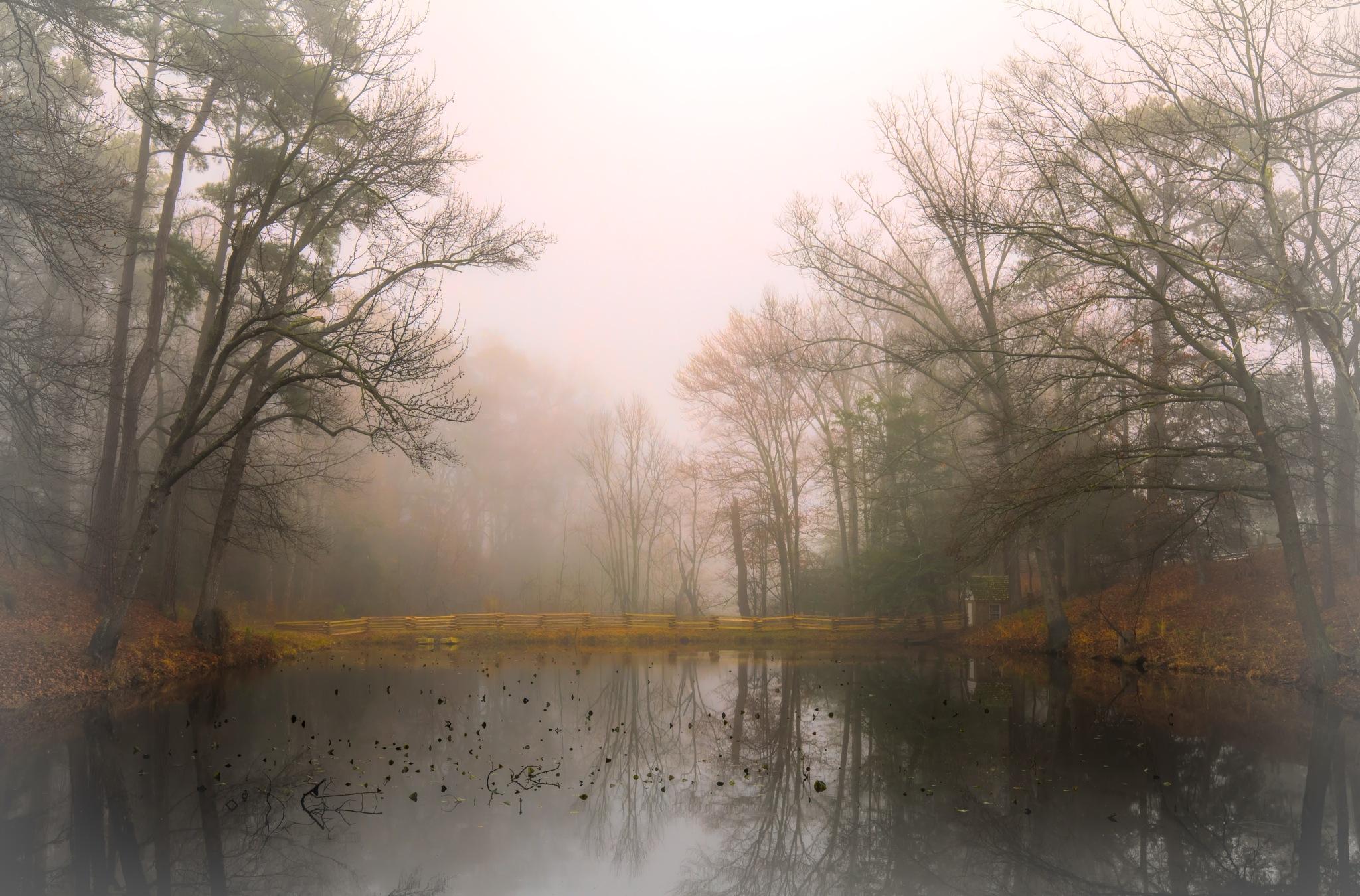 A Still Morning by Mary Carter
