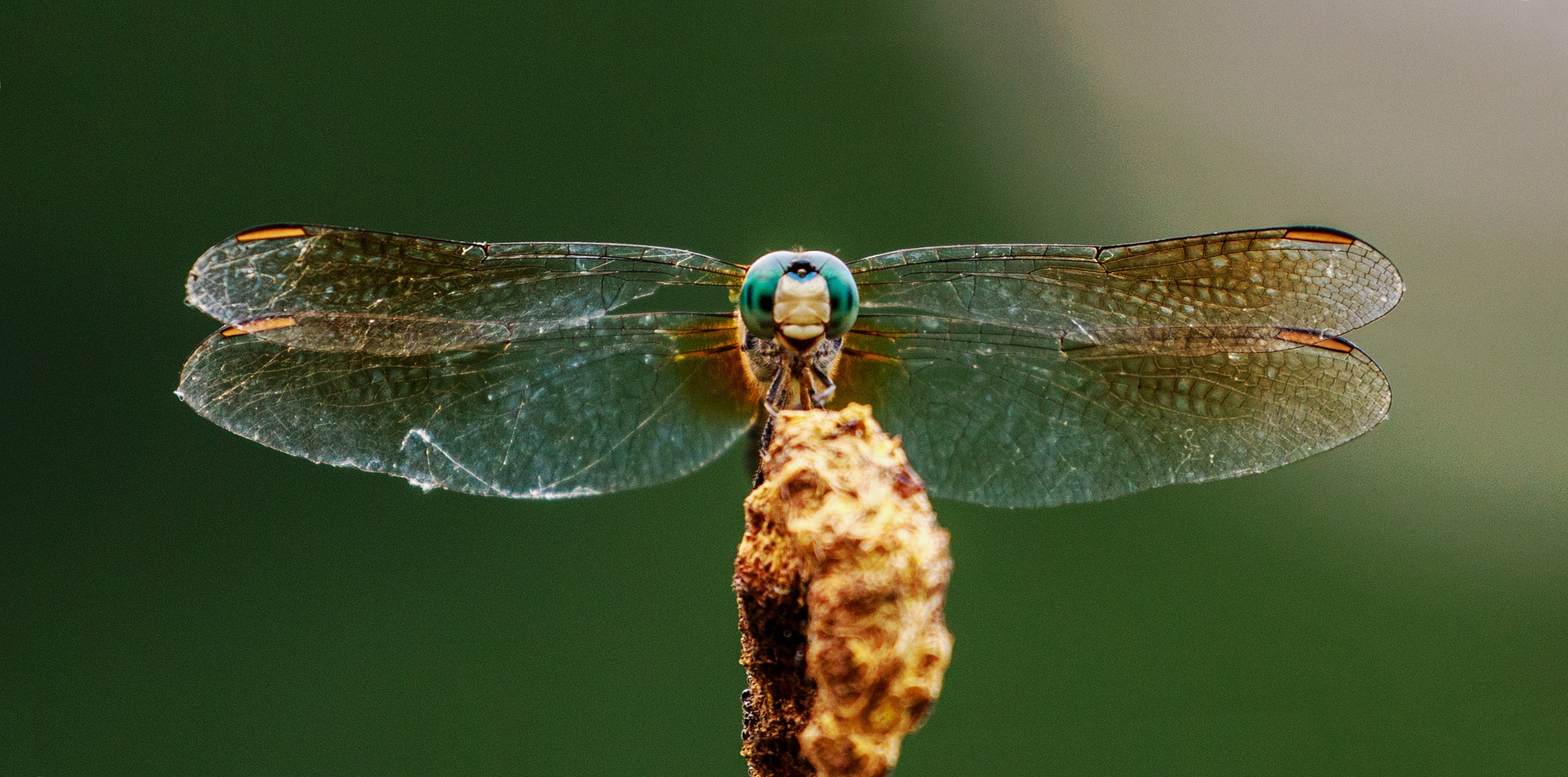 Evinrude the Dragonfly by Mary Carter