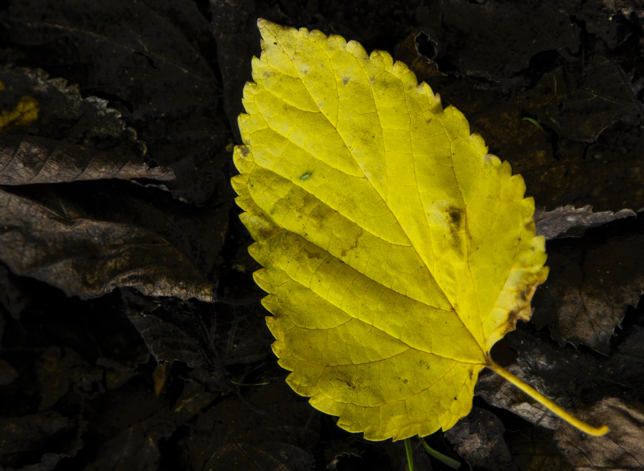 Yellow by Mary Carter