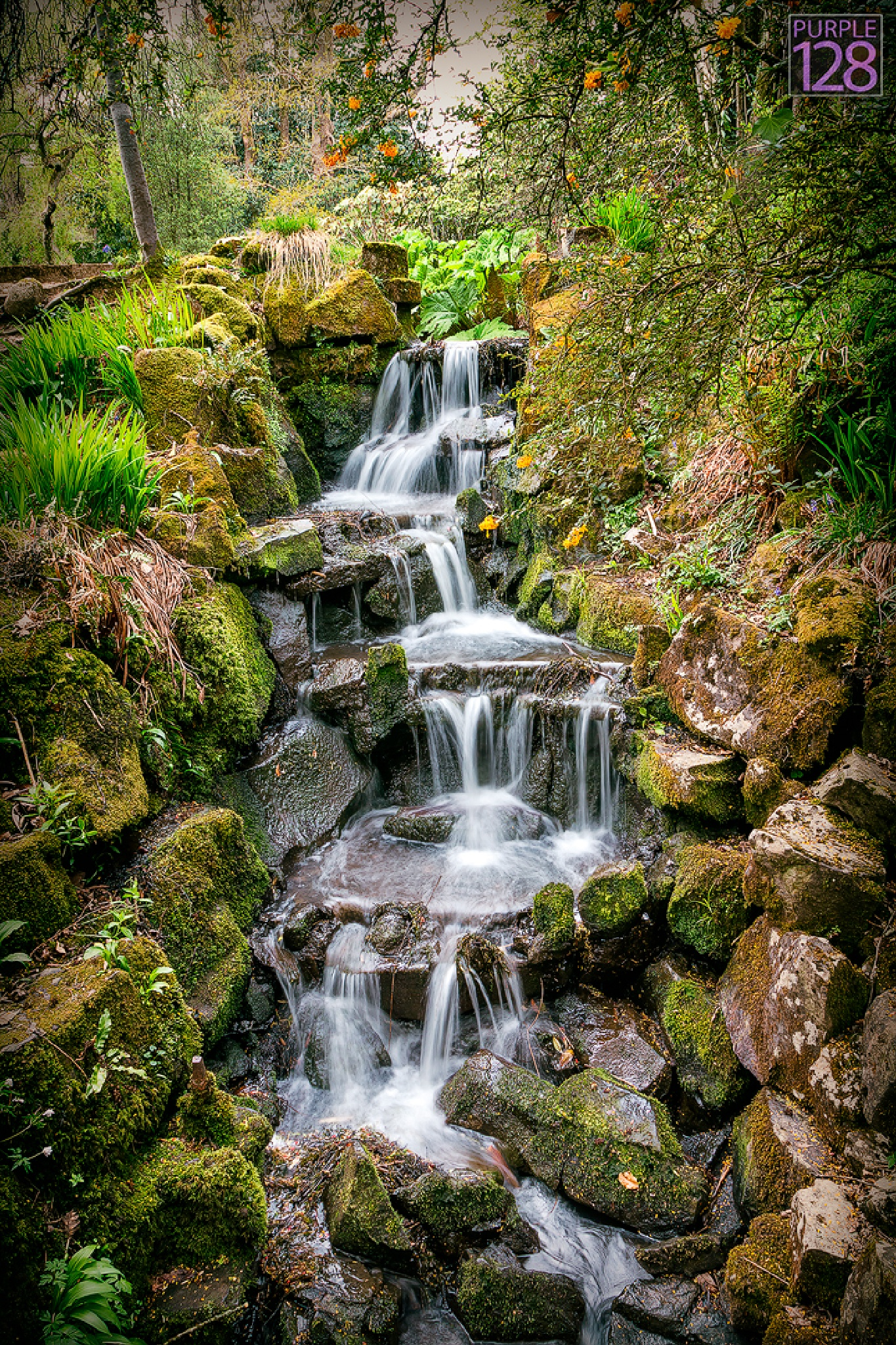 Clyne Gardens, Swansea, South Wales by Purple128