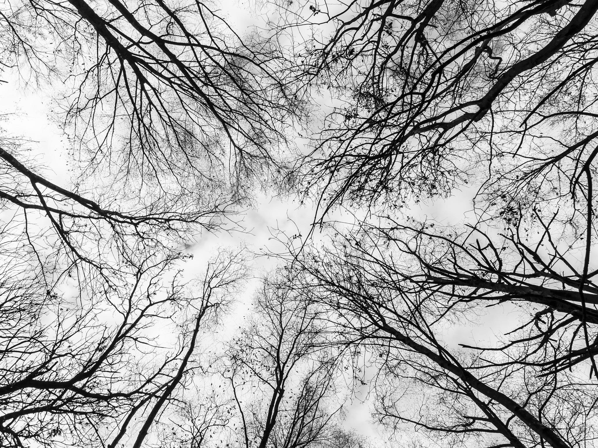 Wood by Fabio Drigo
