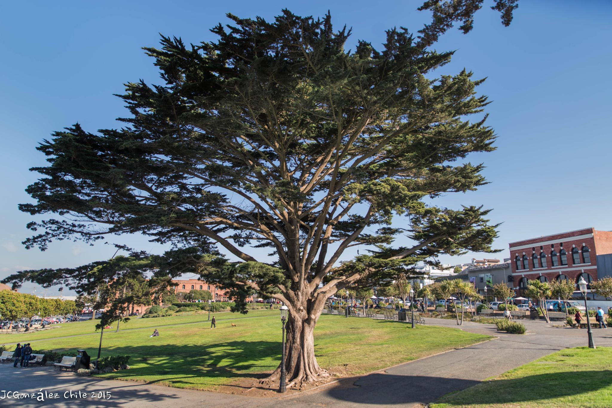 A beautiful tree by JuanCaPhotography