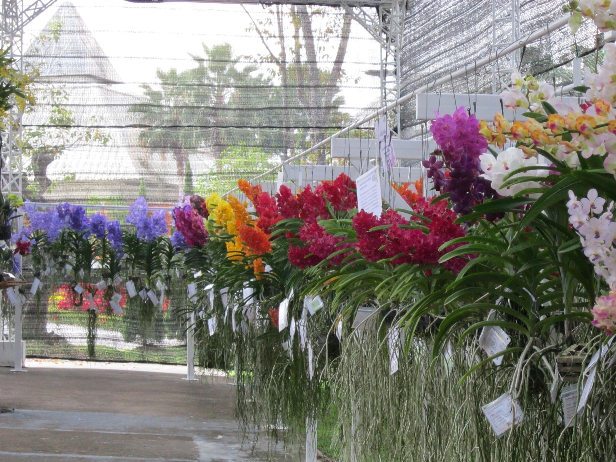 Chiang Mai Flower Show 5 by mitch.lizar