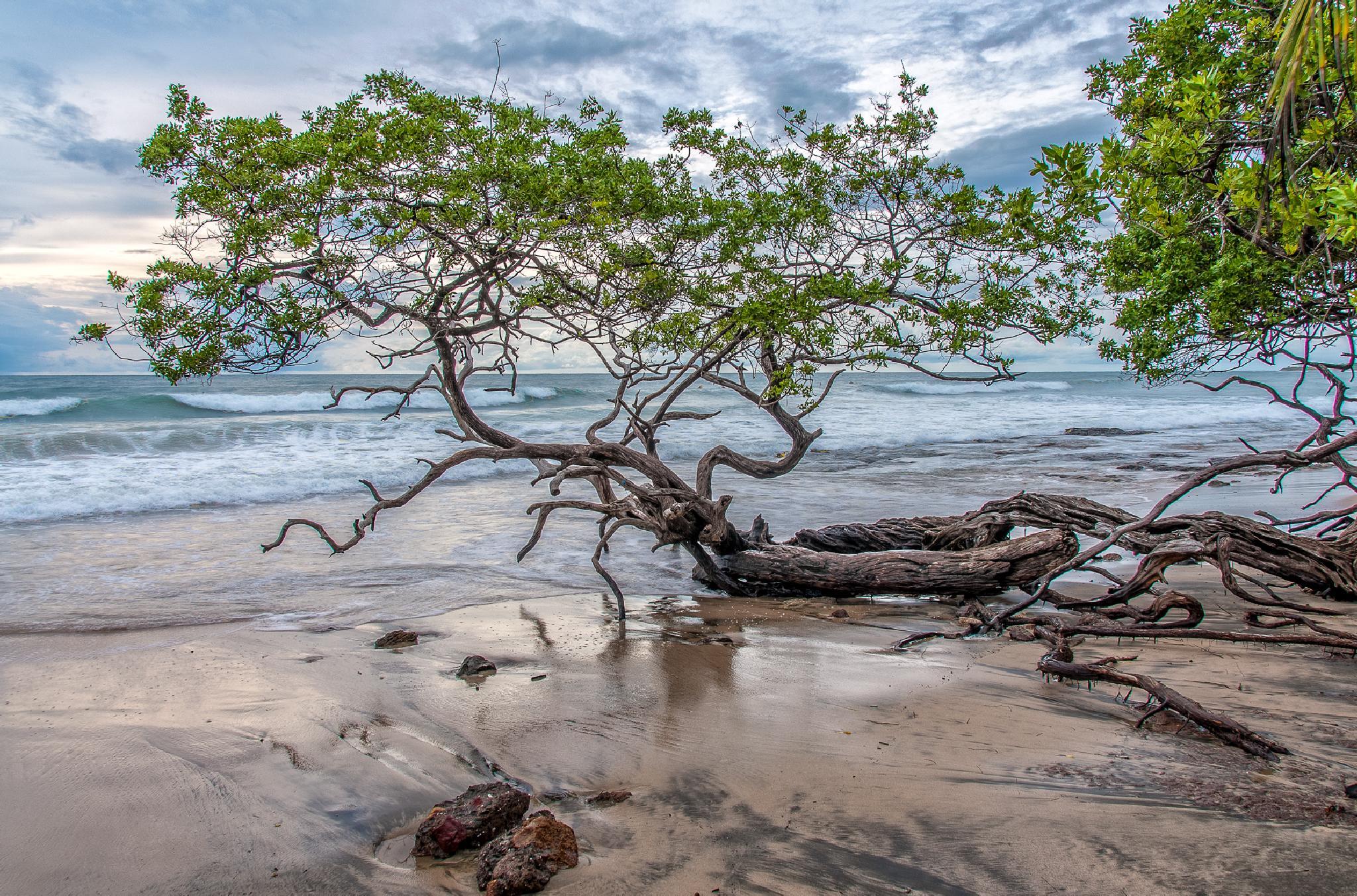 Ocean Tree by JRGt12