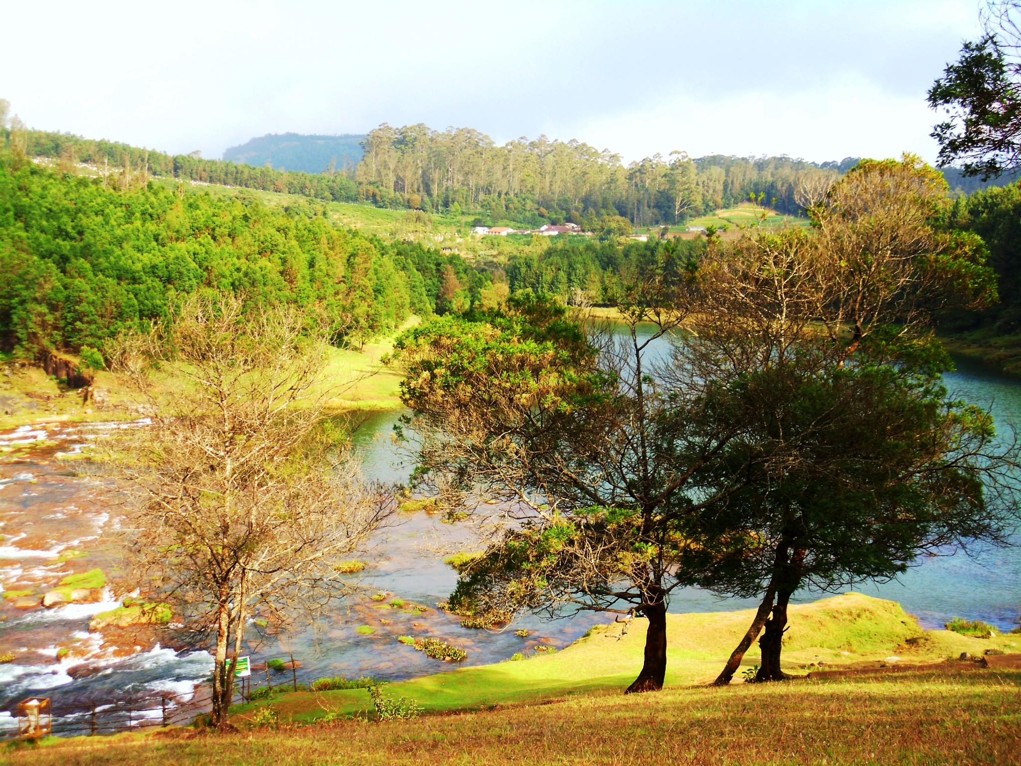 Landscape by Roy cliffer
