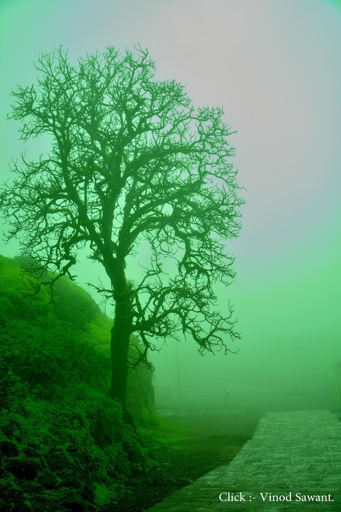Tree by vinodsawant