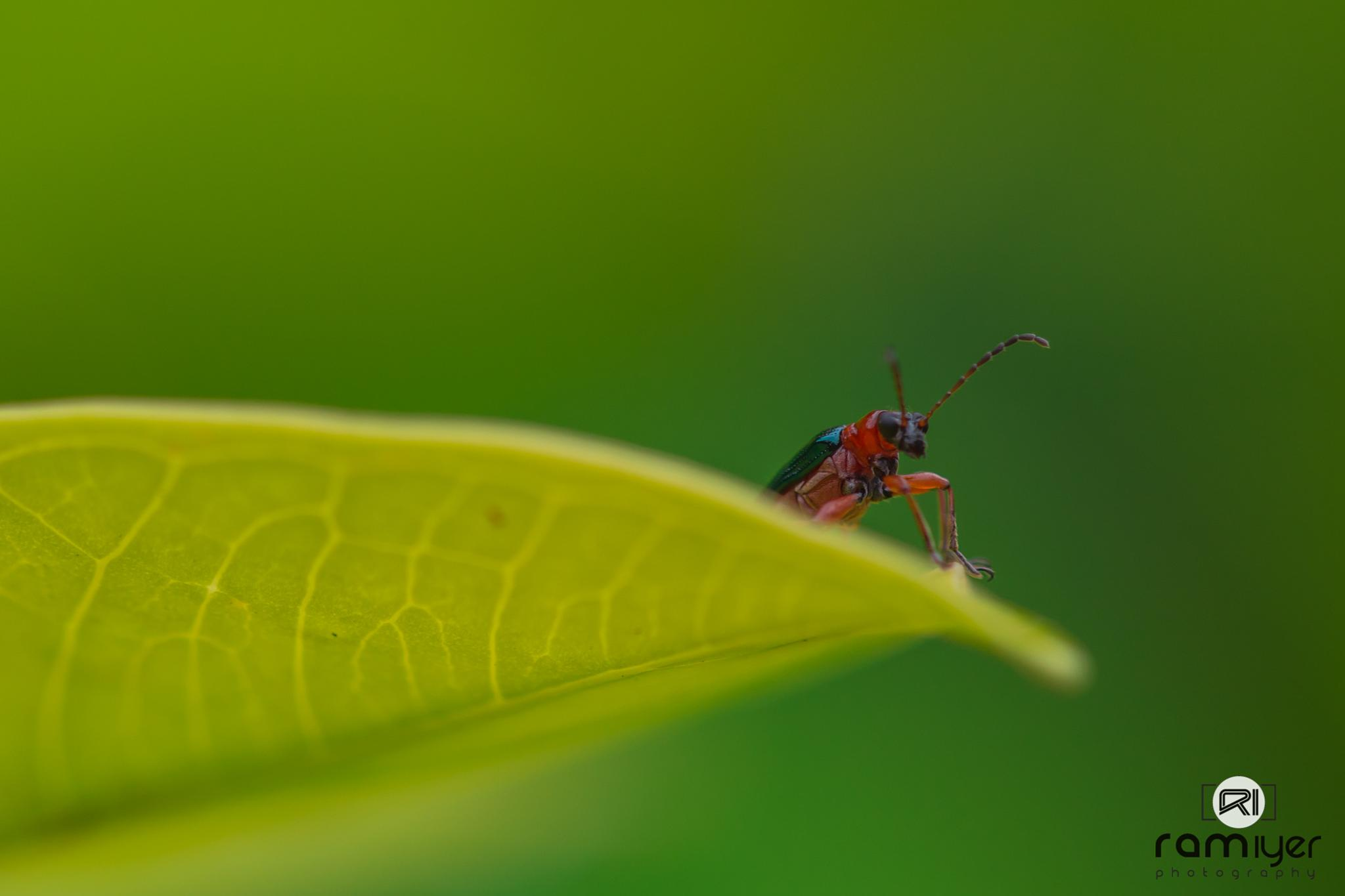 the 'bug' never stops by Ram Iyer