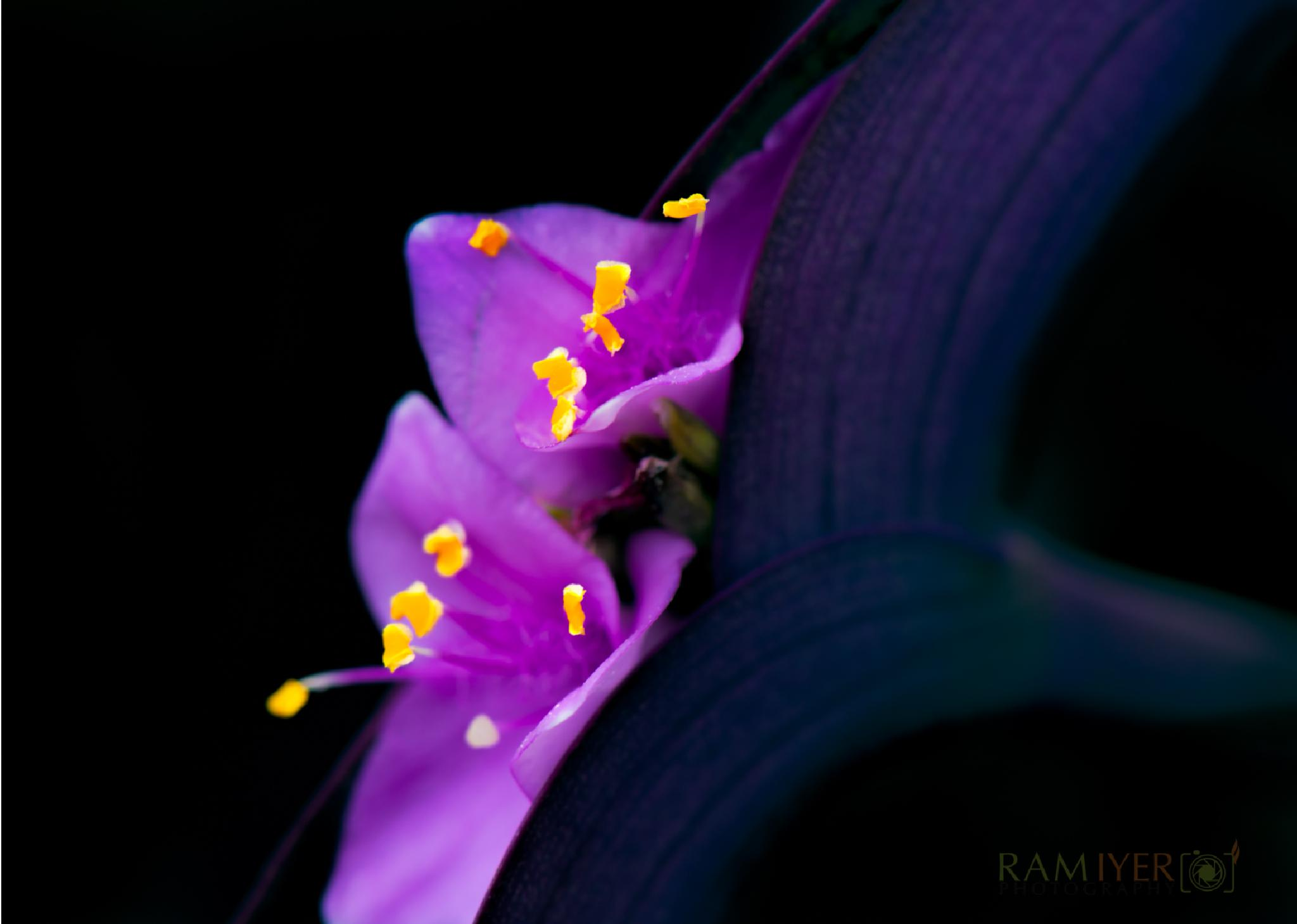Angle of attack! by Ram Iyer