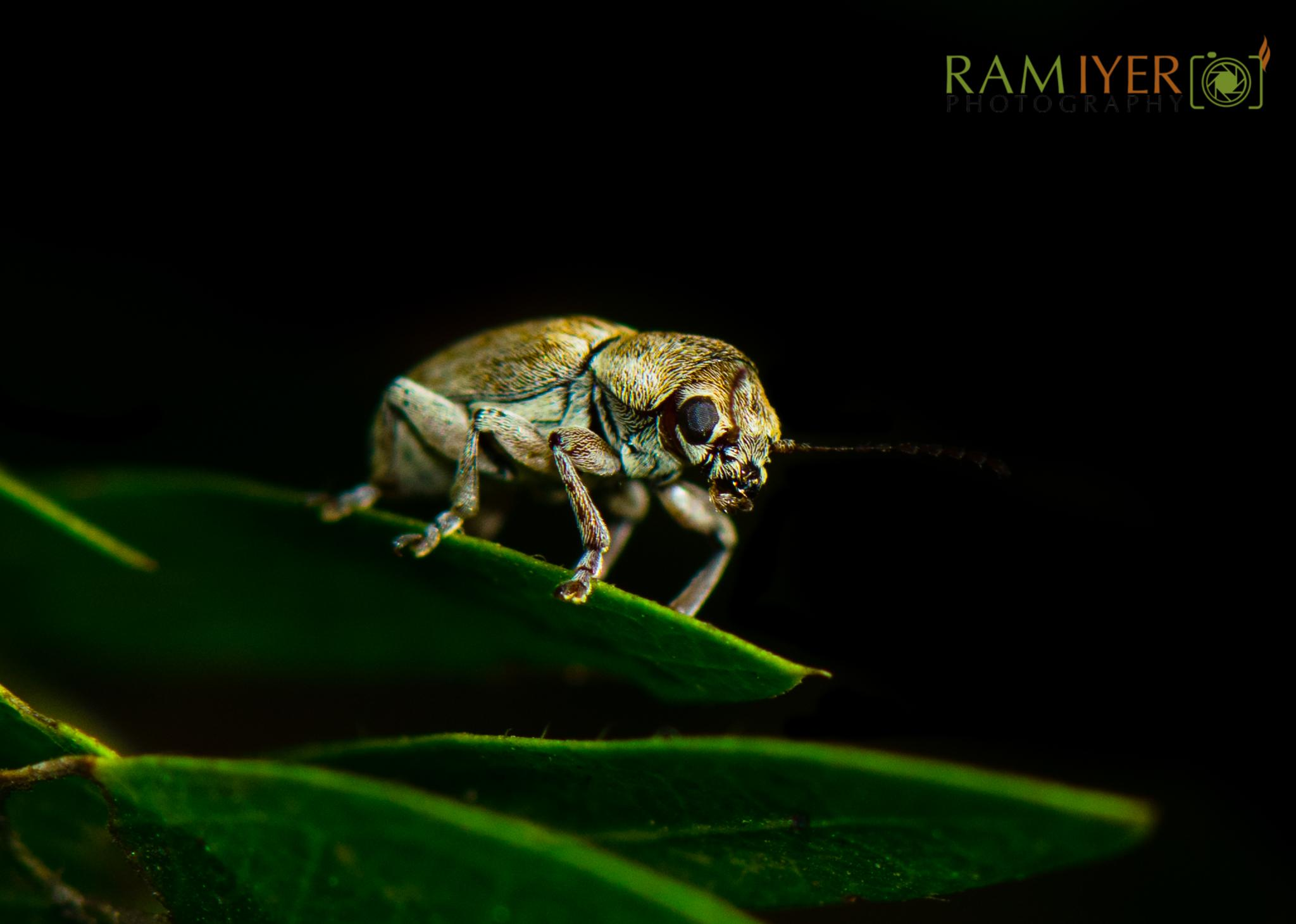 Just for you CLOSELY!!! by Ram Iyer