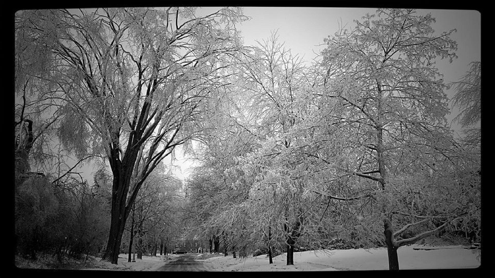 Ice Storm by mimi.difrancesca