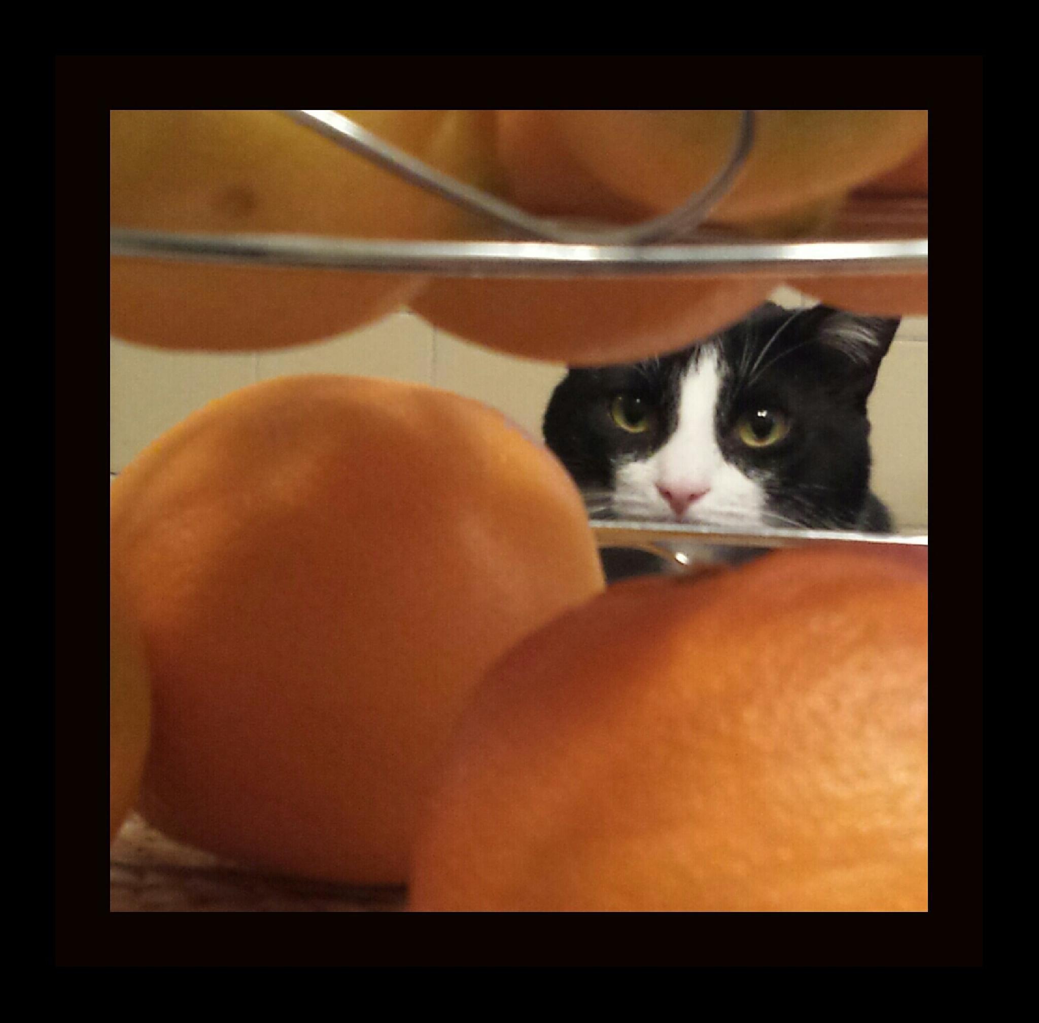 Trav and Oranges by mimi.difrancesca