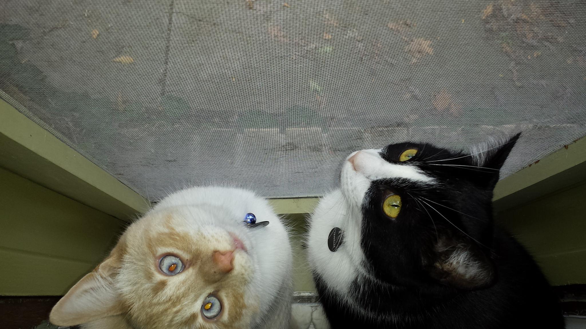 Curious cats by mimi.difrancesca