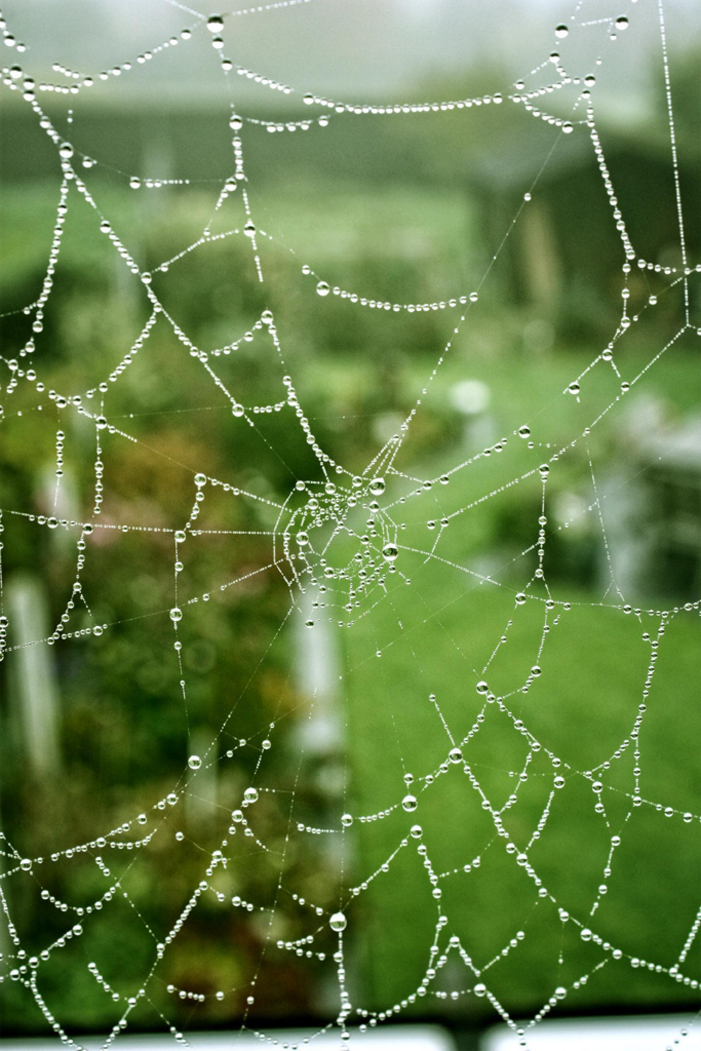 Spiderweb by sg design