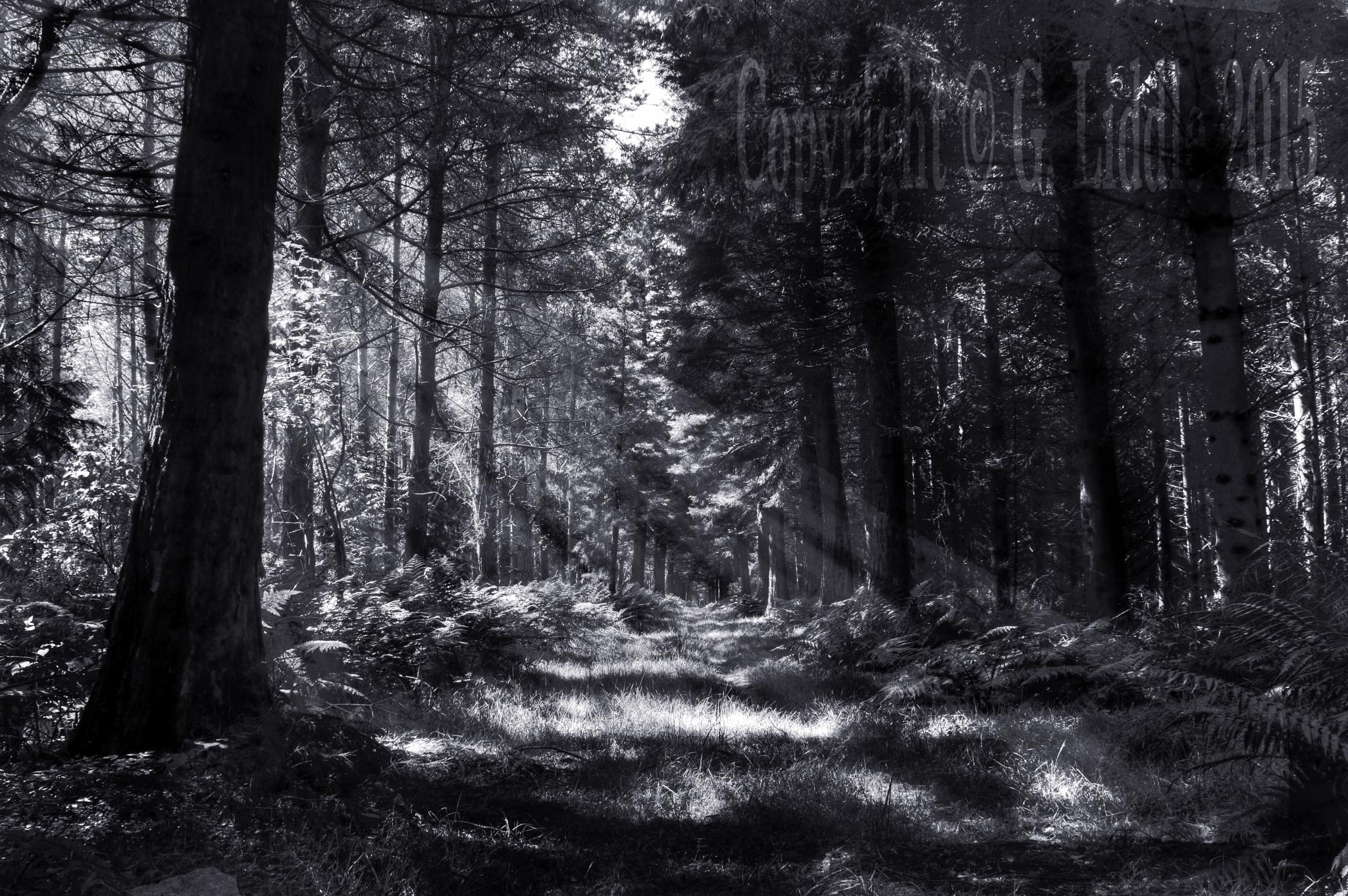 Bowmont Forest by Gav_Liddle